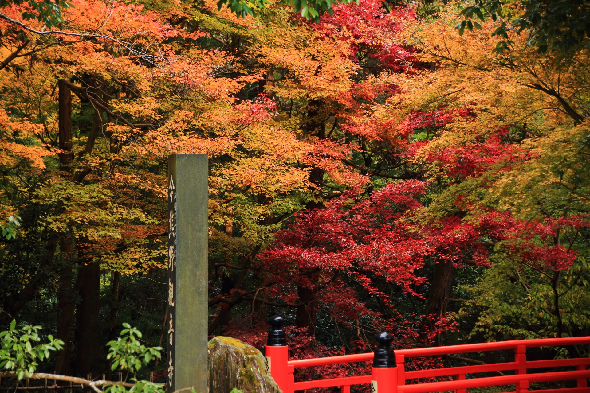 赤やオレンジの紅葉につつまれる横から眺めた鳥居橋