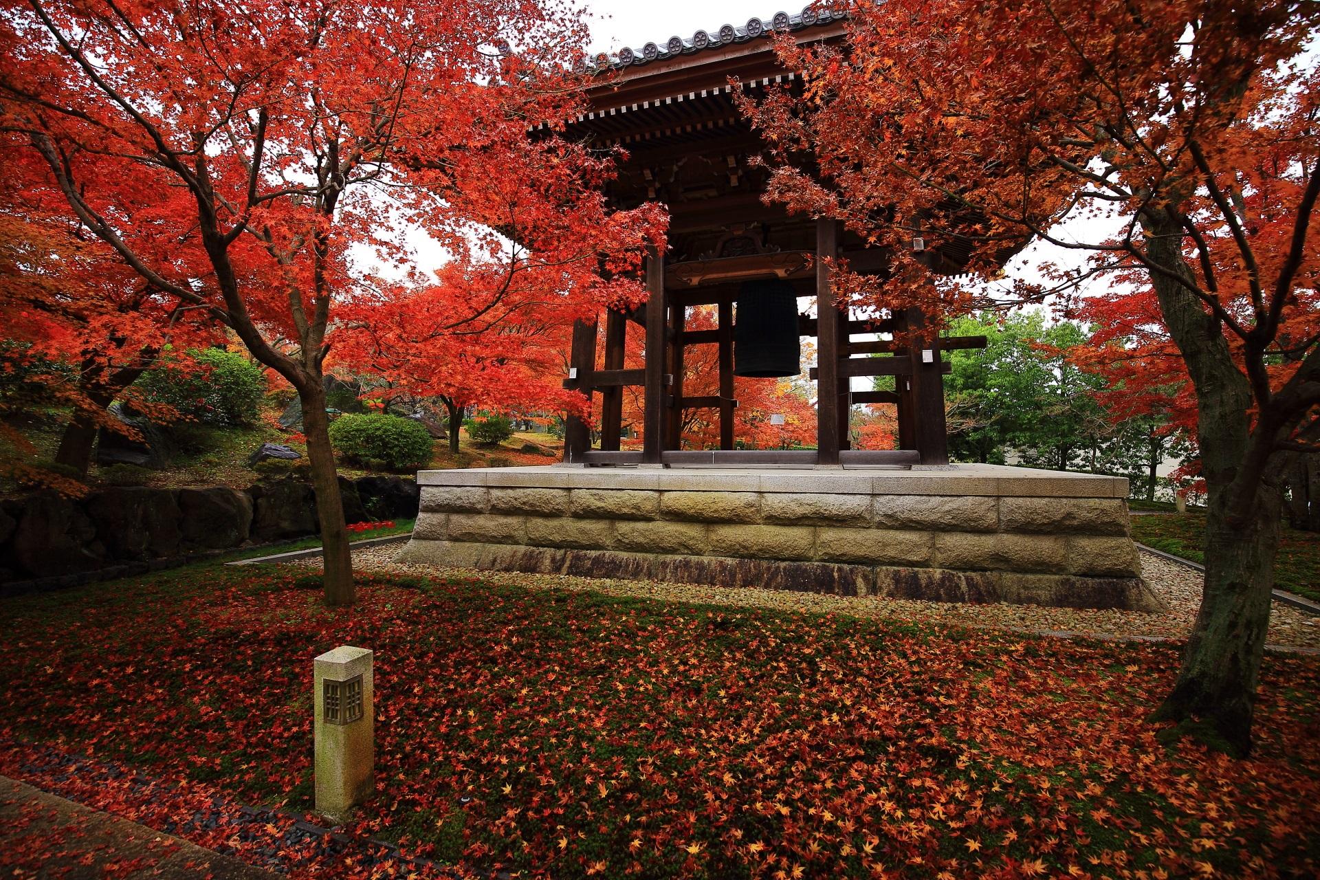 智積院の晩秋の紅葉と激しい「散り」