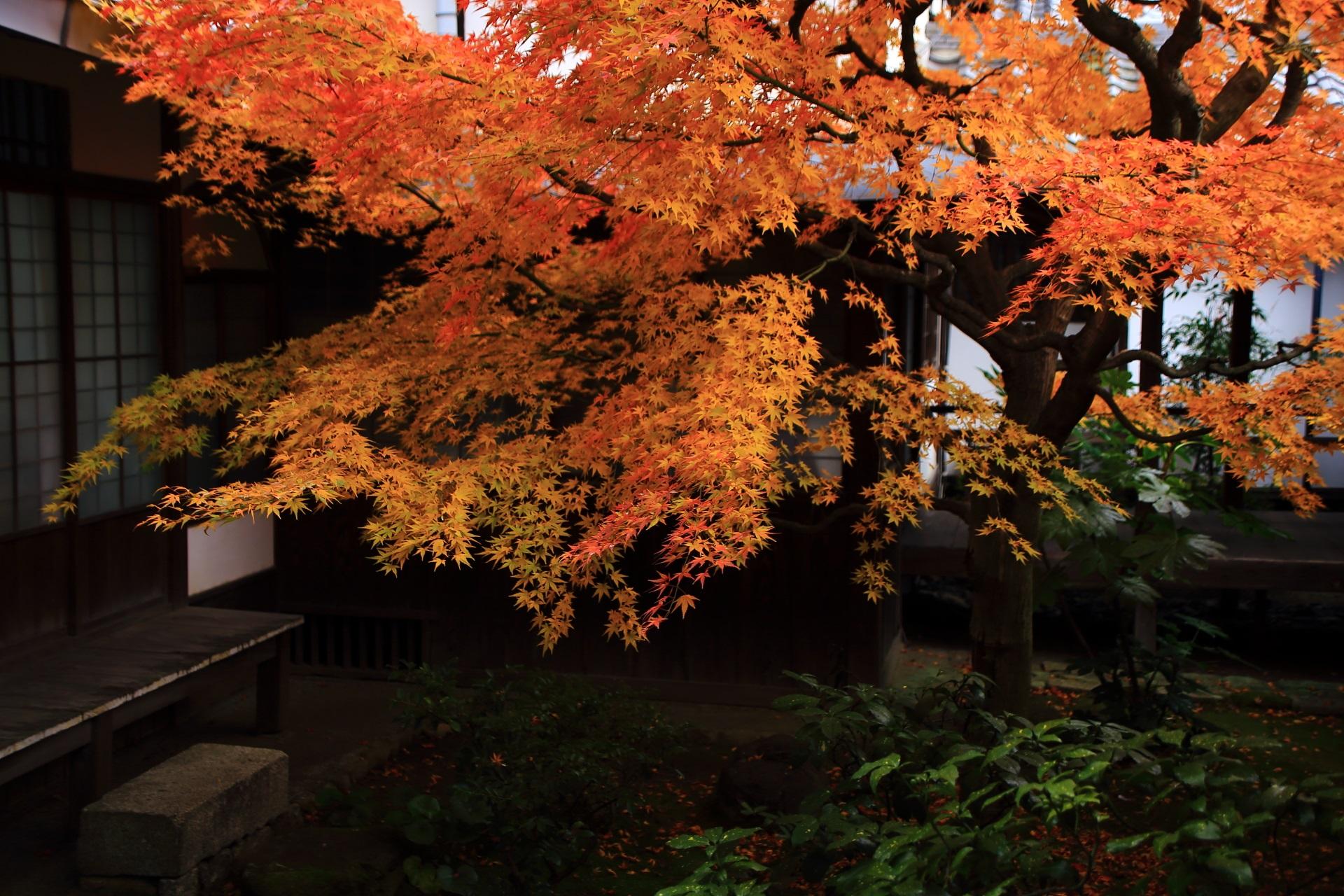 本法寺の溢れんばかりに生き生きとした紅葉