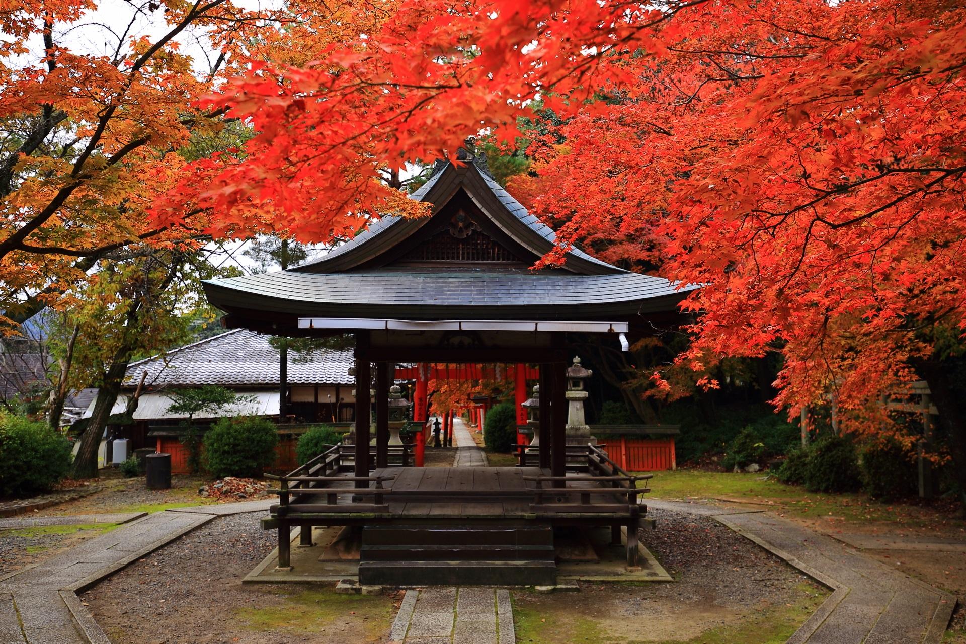 竹中稲荷神社の拝殿と鳥居を彩る絶品の紅葉