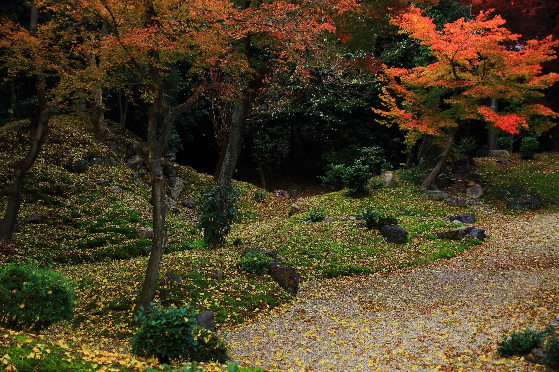立本寺の散り銀杏に彩られた築山と庭園を華やぐ鮮やかな紅葉