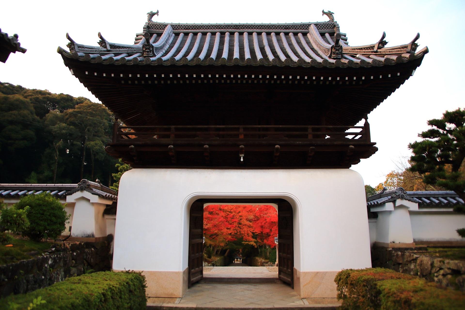 興聖寺の龍宮門から見える琴坂の見事な秋色の光景
