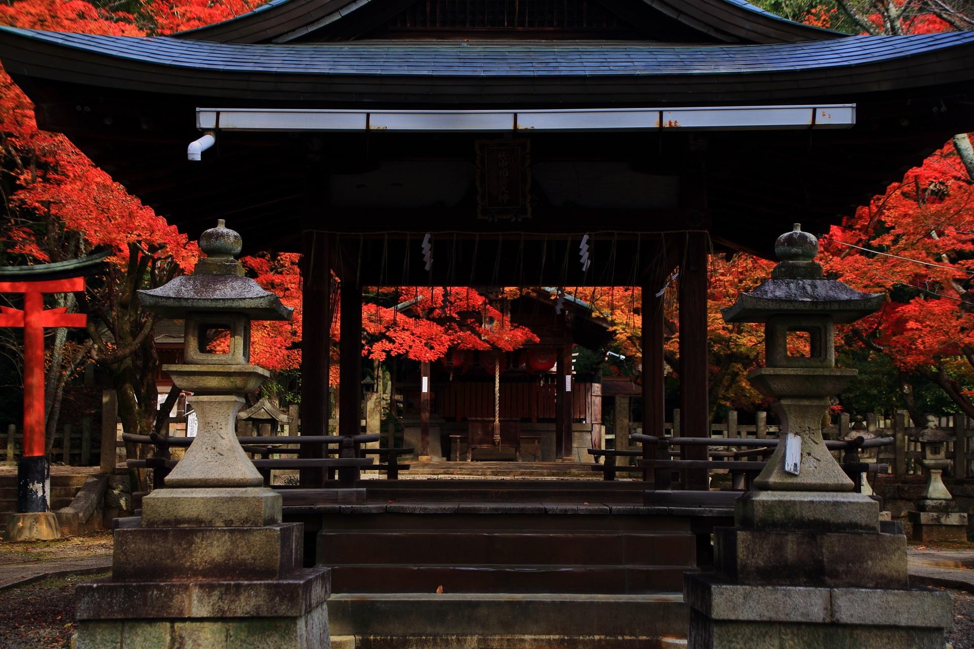 竹中稲荷神社の拝殿と本殿を華やぐ見事な色づきの紅葉