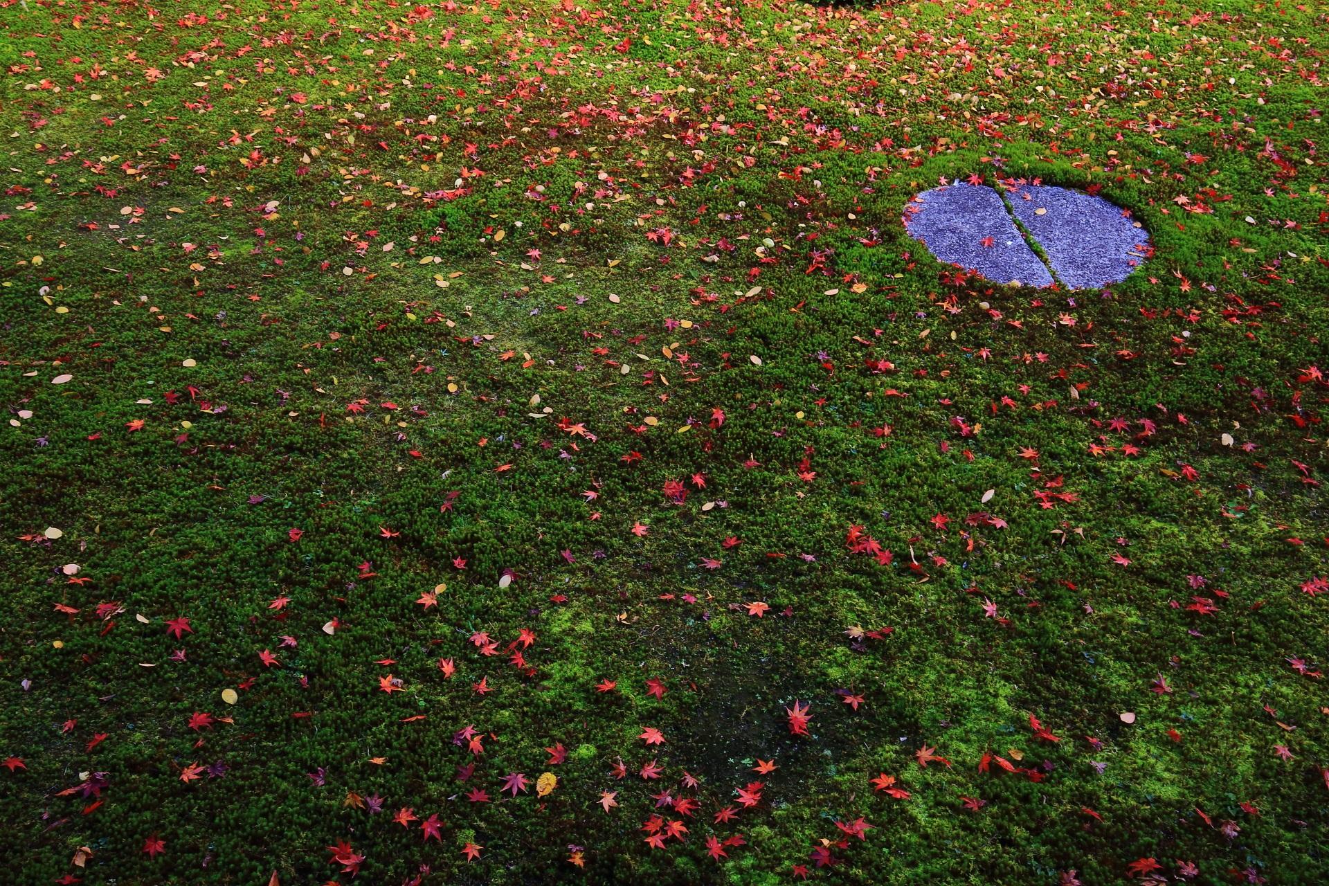 本法寺の苔の上の可愛いく華やかな散り紅葉