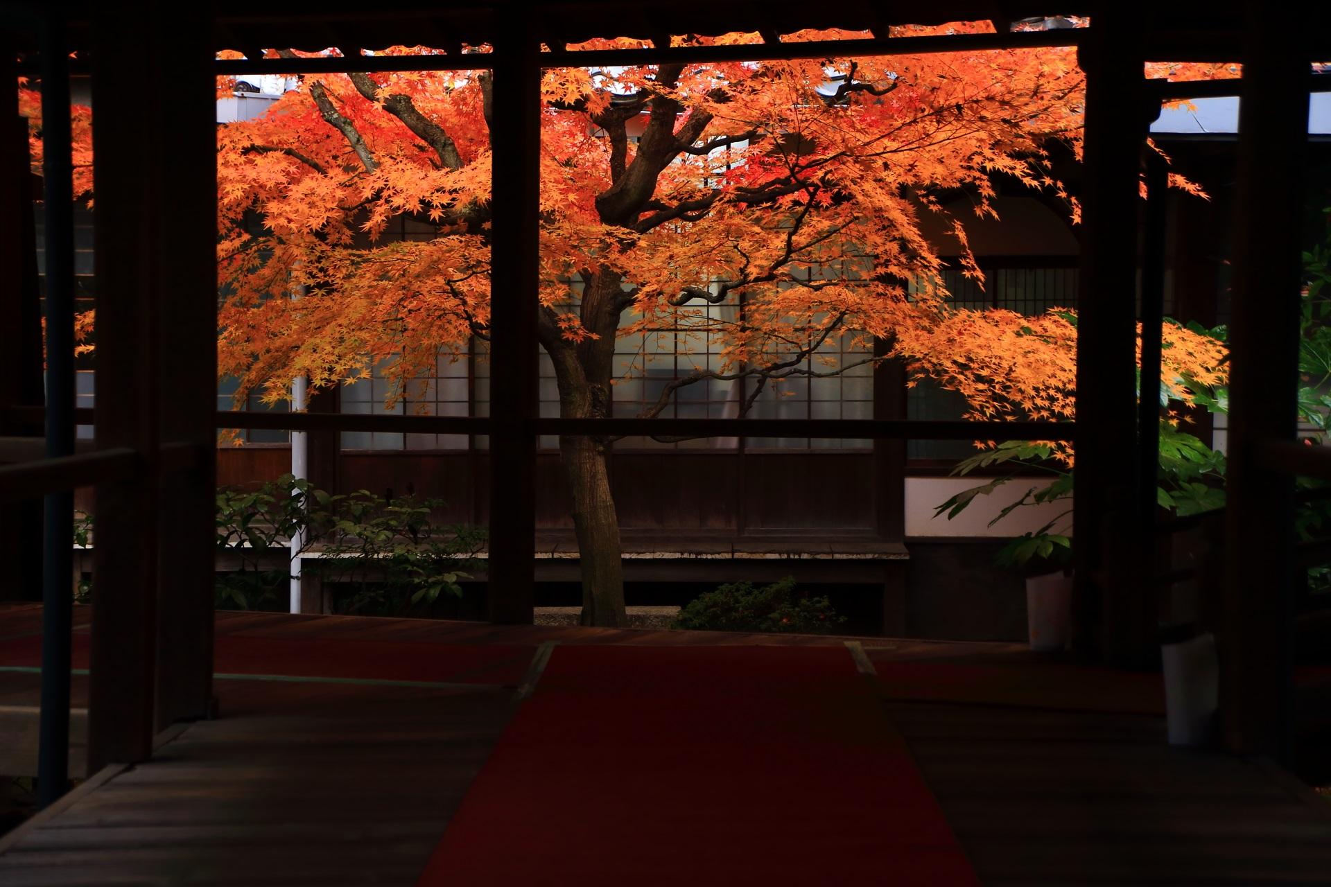 風情ある紅葉と苔を彩る散りもみじ