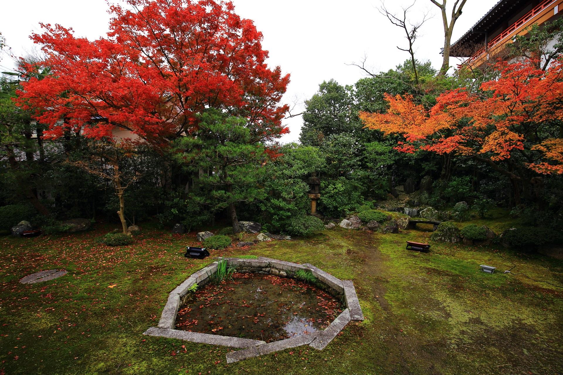 本法寺 紅葉 鮮やかな秋色と華やかな散りもみじ