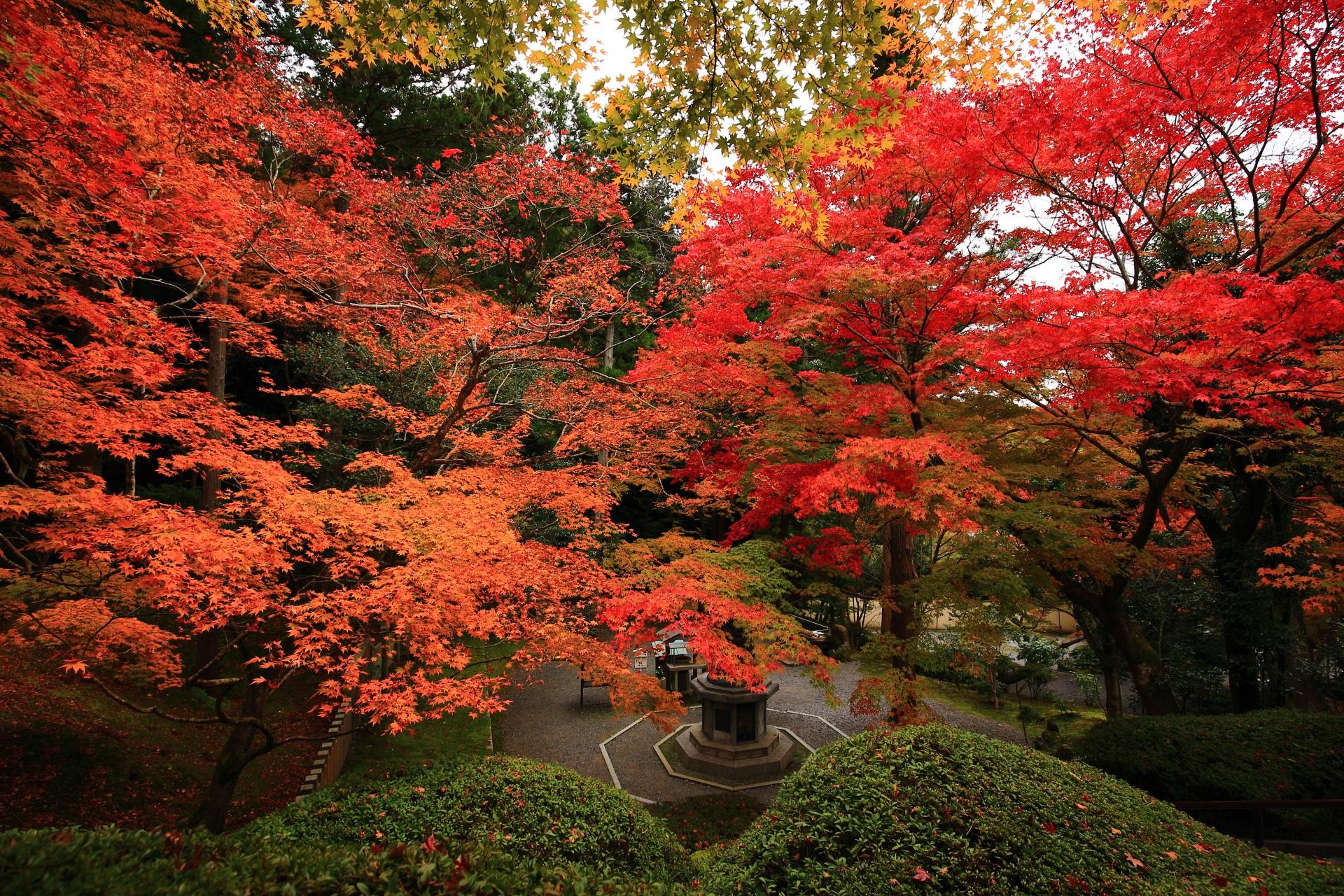 今熊野観音寺 紅葉 色とりどりの鮮やかなもみじ