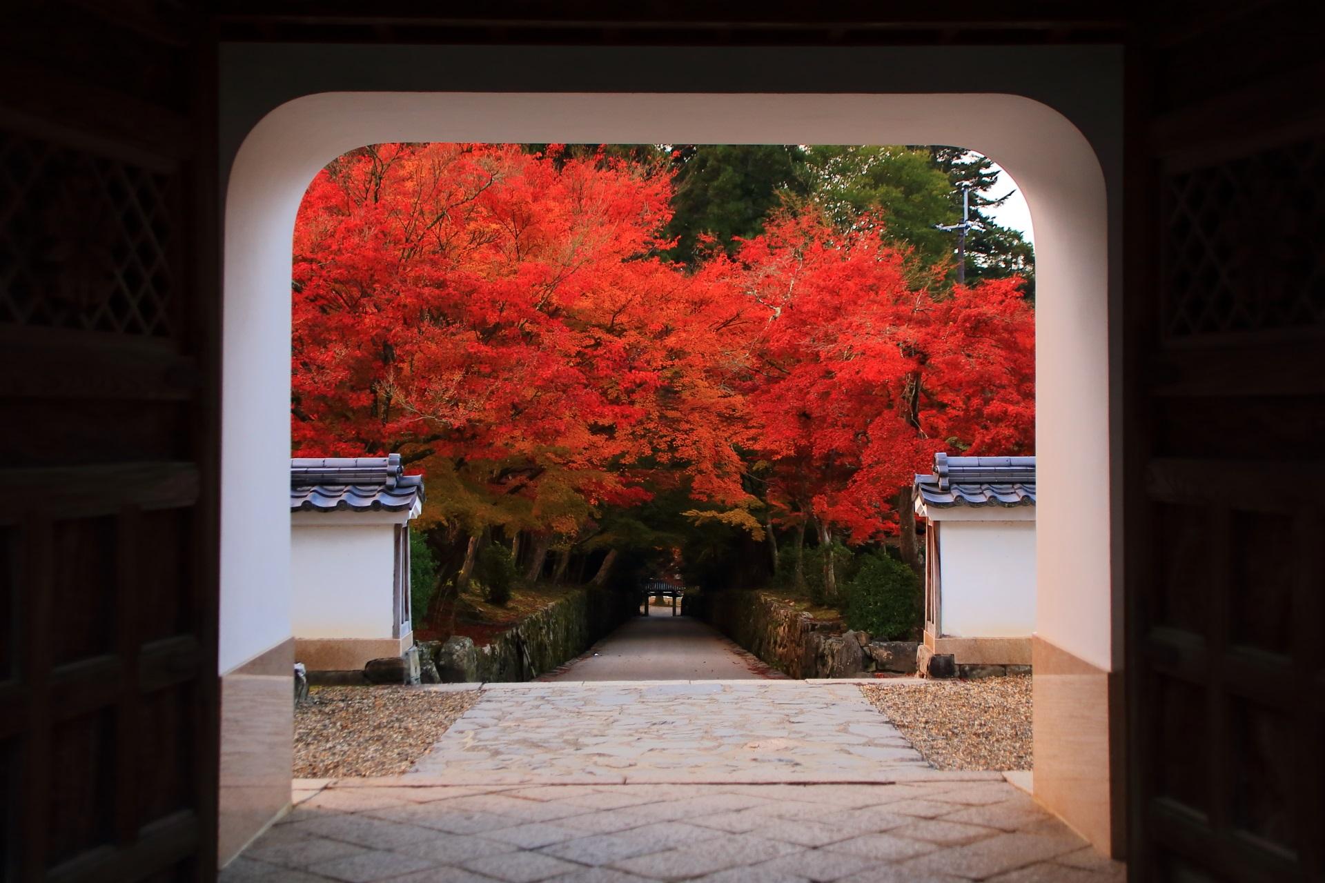 琴坂 紅葉 色とりどりの絶品のもみじと秋の興聖寺