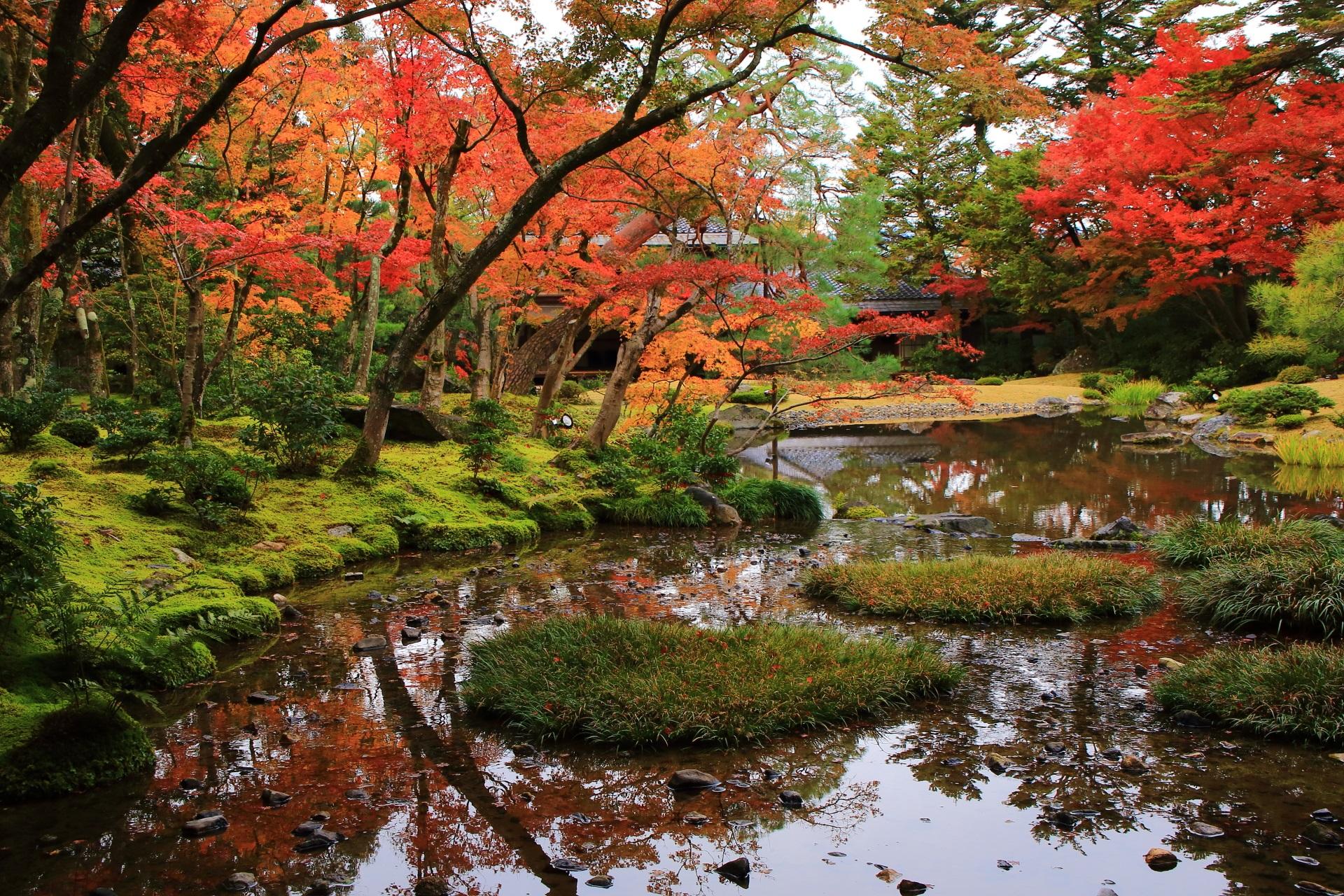 無鄰菴 紅葉 水辺と苔を彩る長閑で多彩な秋色