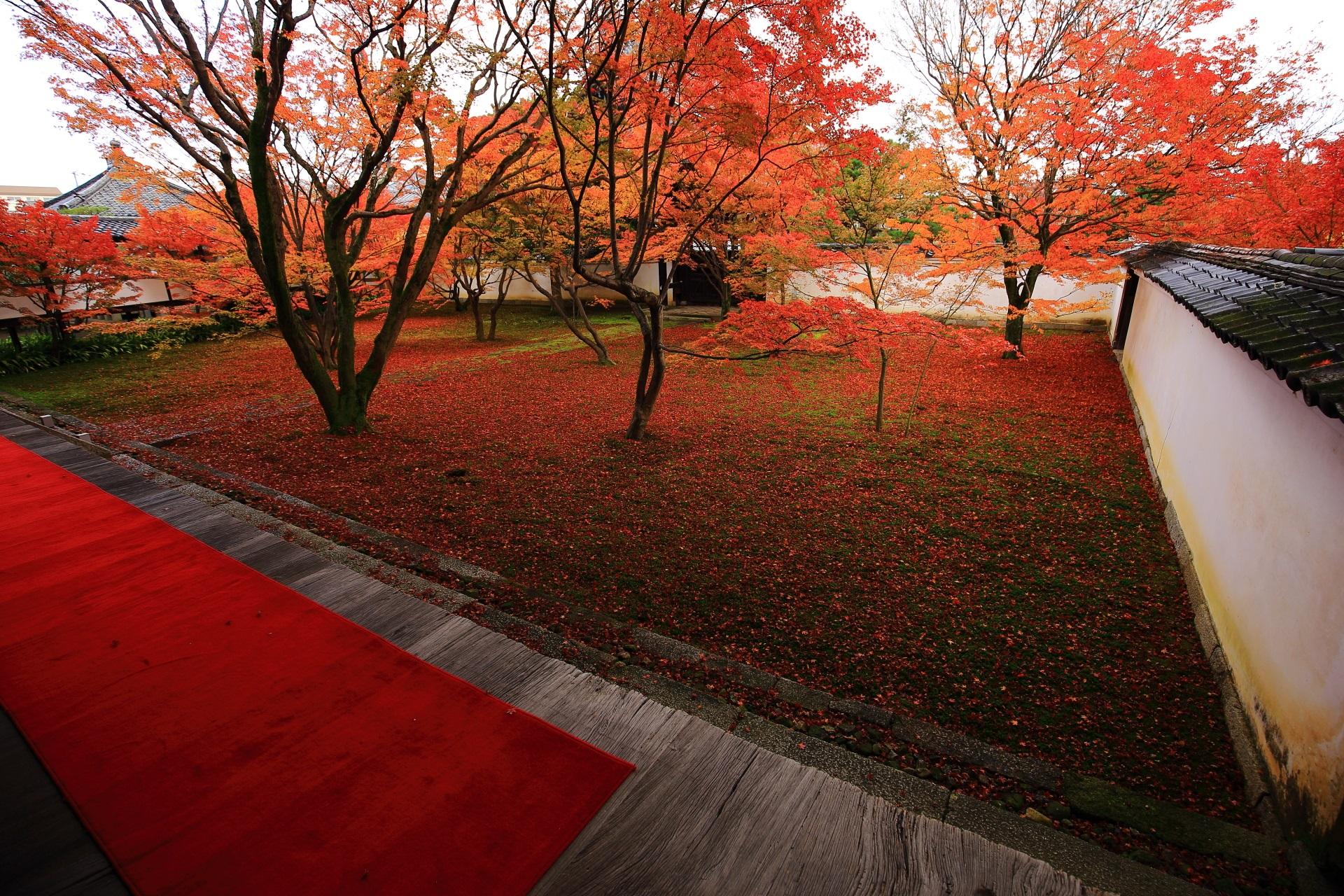 妙覚寺 紅葉 秋色につつまれる街中の隠れた庭園