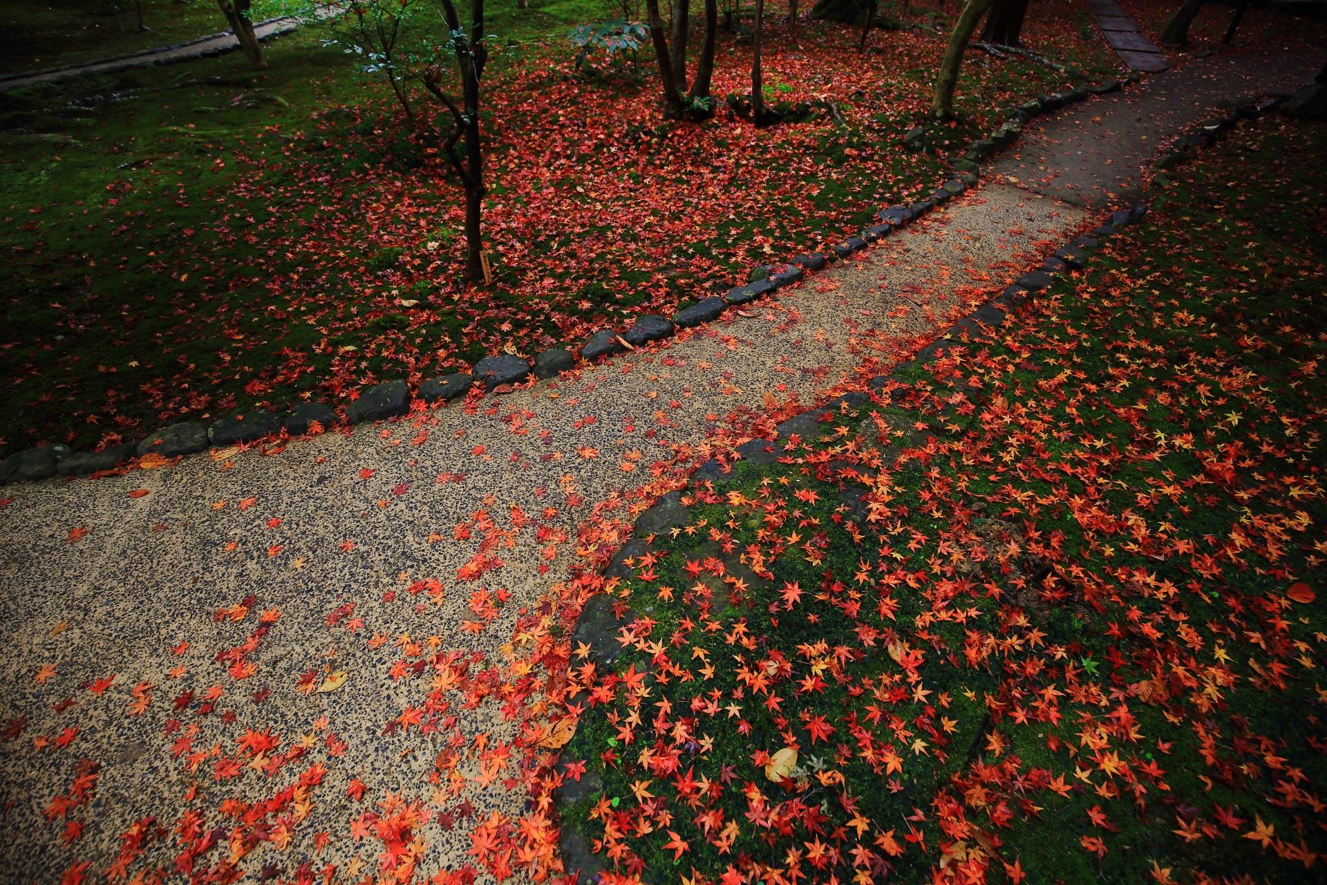 華やかな散り紅葉