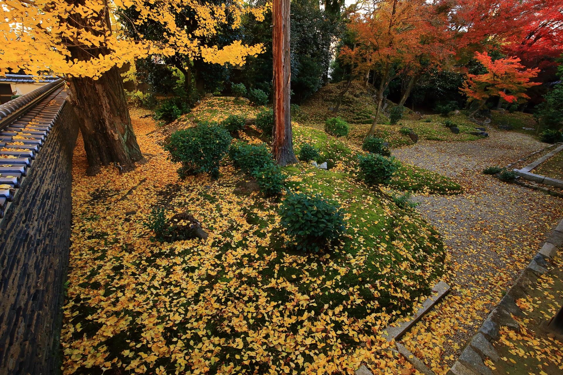 立本寺 銀杏と散り銀杏 庭園を彩る圧巻の秋色