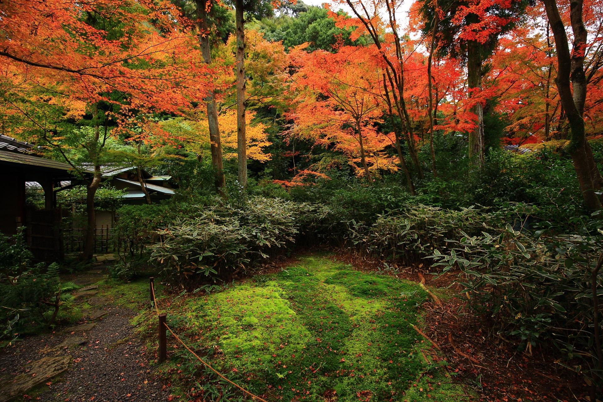 含翆庭 紅葉 緑の苔と淡い秋色につつまれる来迎院