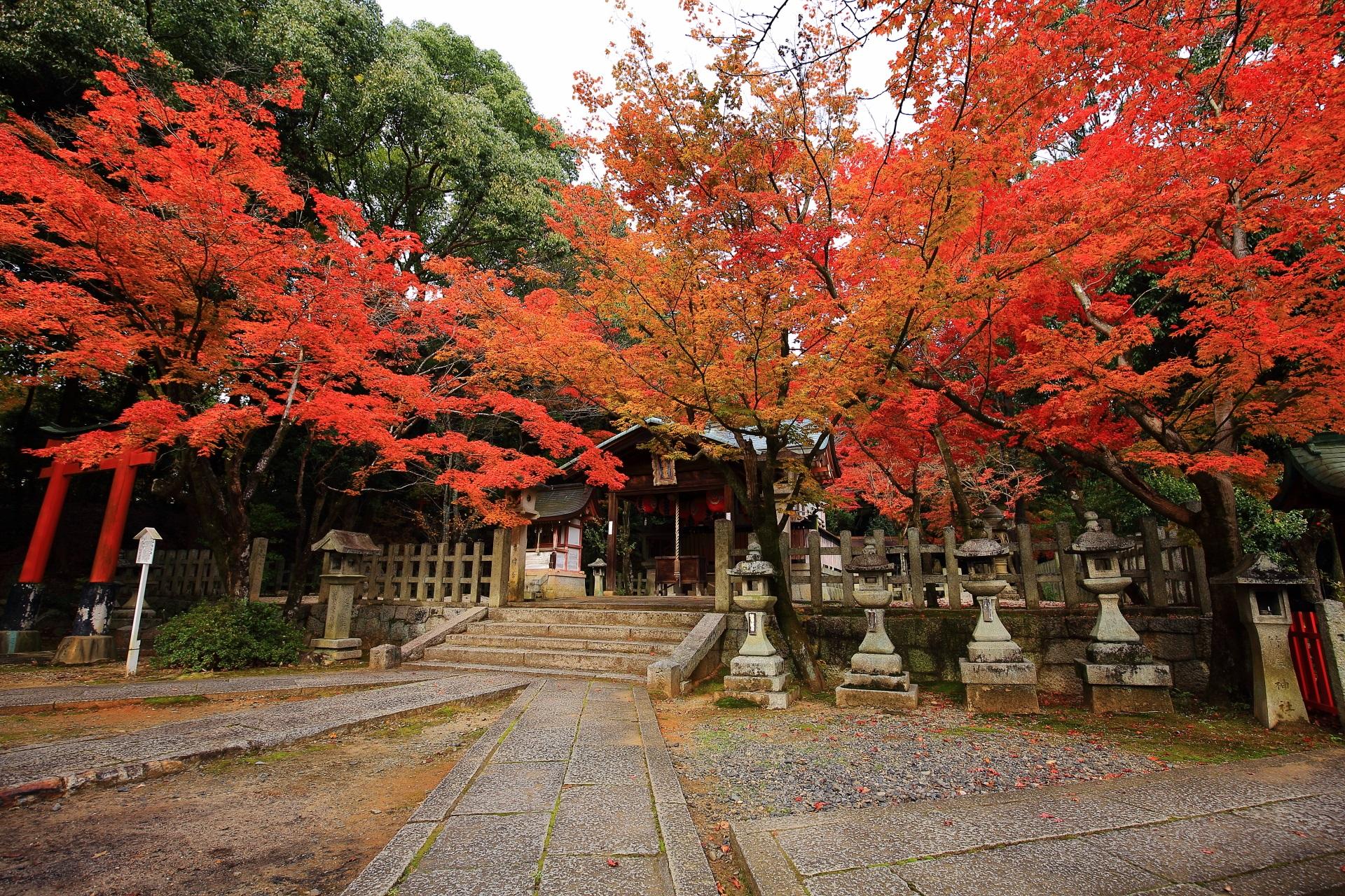 竹中稲荷神社 紅葉 京都最大級のもみじの穴場