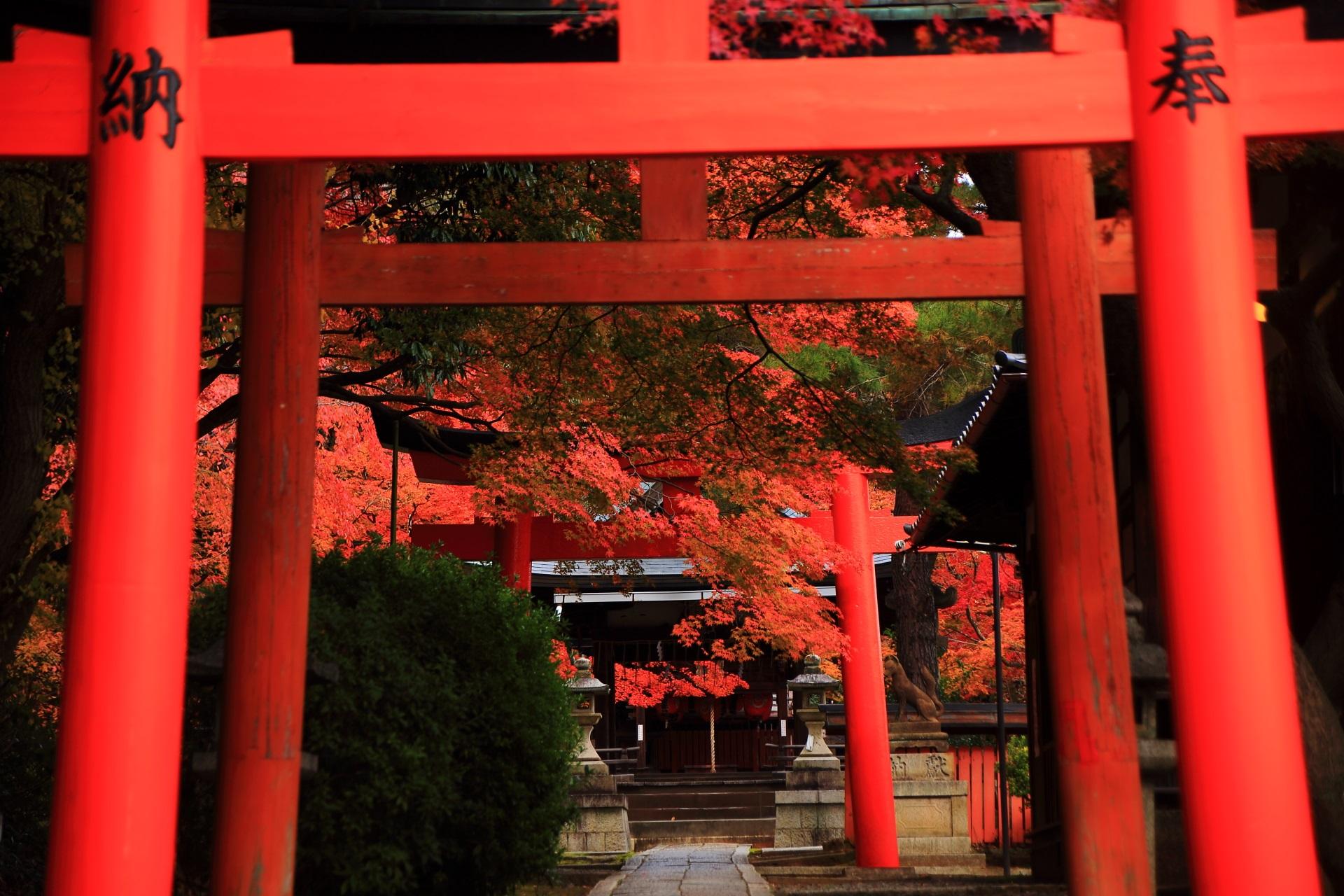 朱色の鳥居から溢れ出る艶やかな紅葉