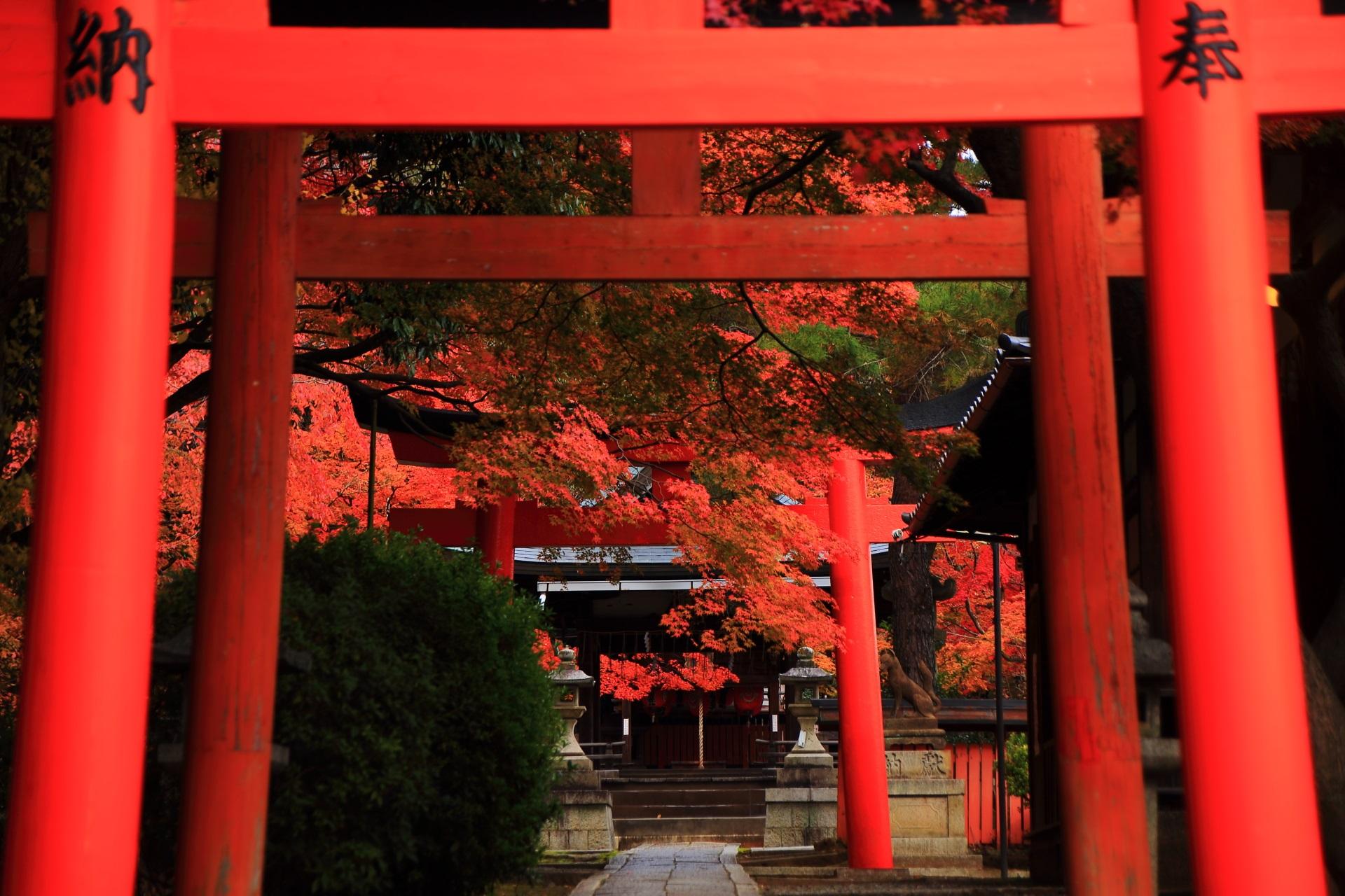 竹中稲荷神社の鳥居の紅葉