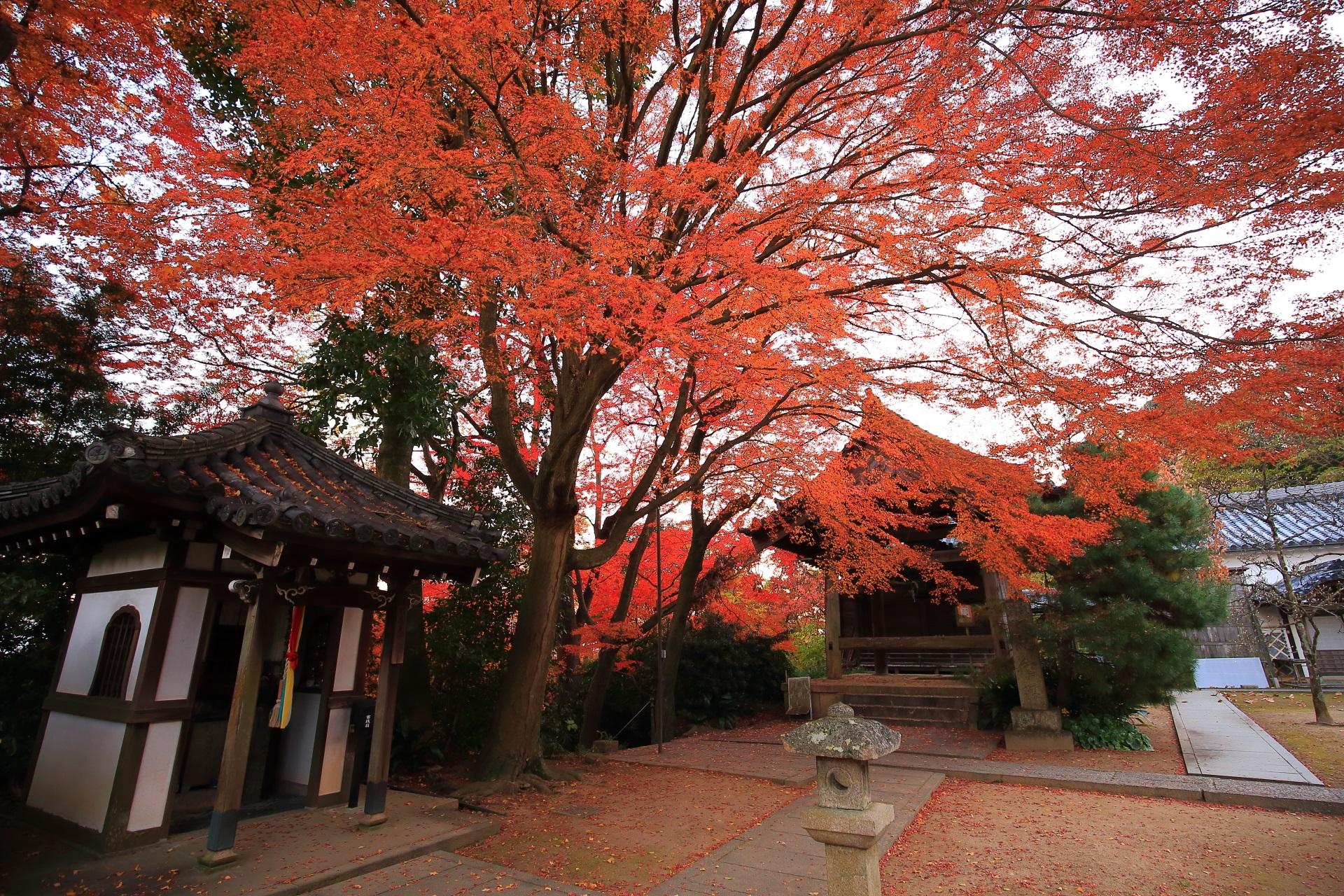 山崎聖天の薬師堂や鐘楼をつつむ大きな紅葉
