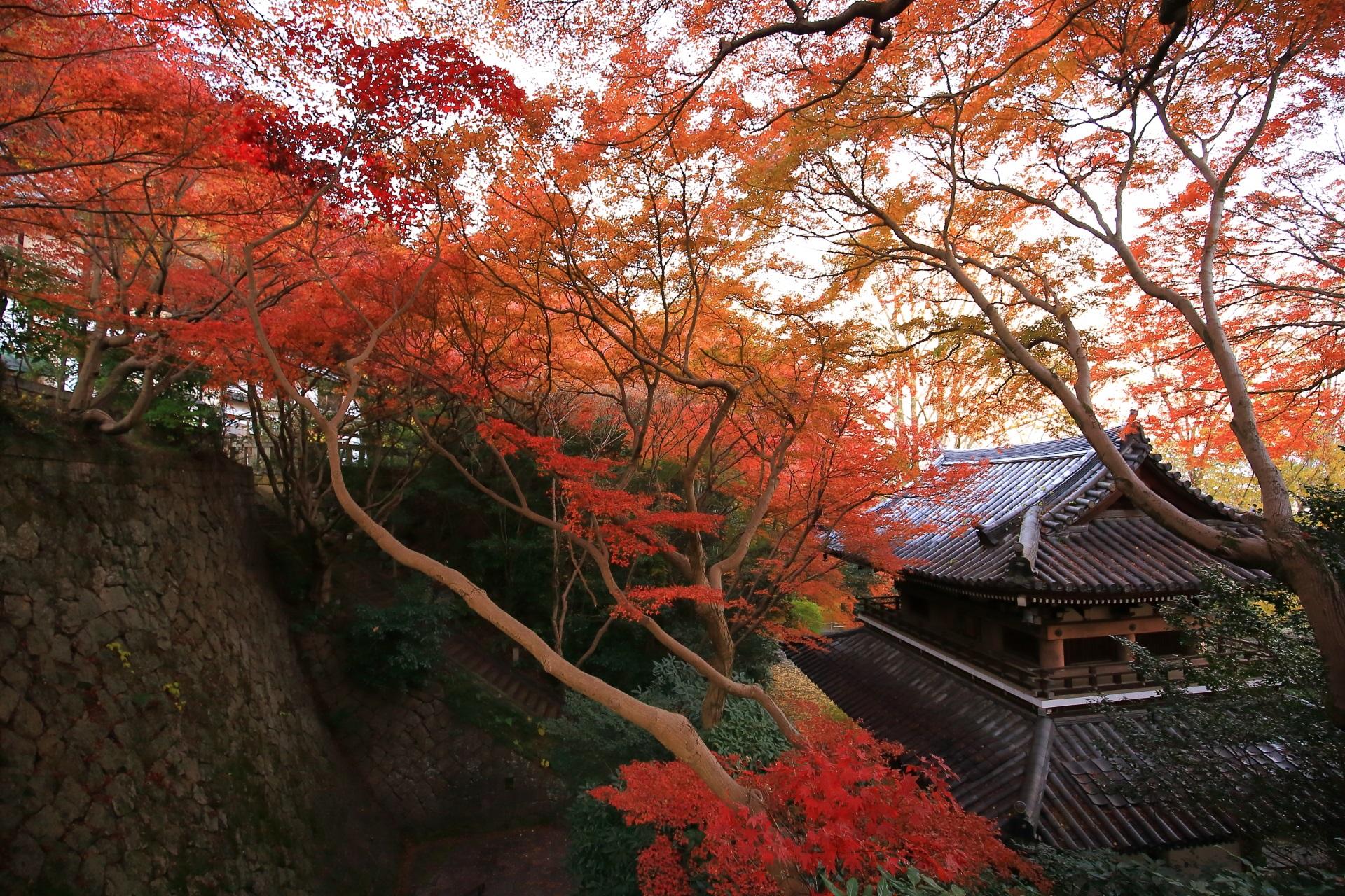 何本ものもみじや楓が織り成す山崎聖天の独特の紅葉の風景