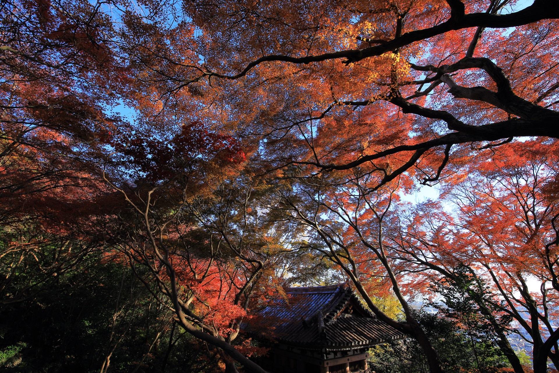日が差している時の青空の下で煌く紅葉と仁王門