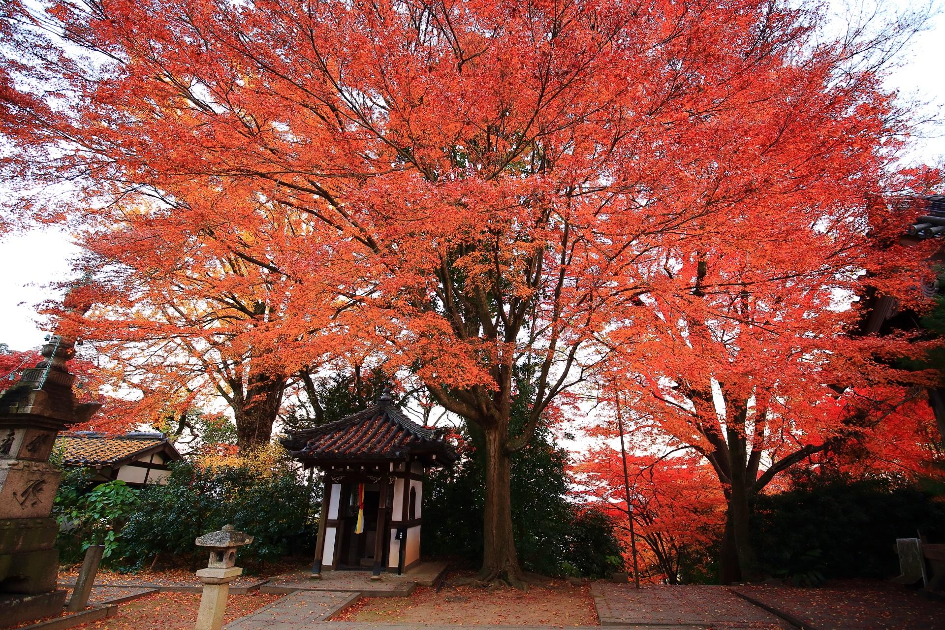 山崎聖天の石段上の空を覆うような雄大な紅葉
