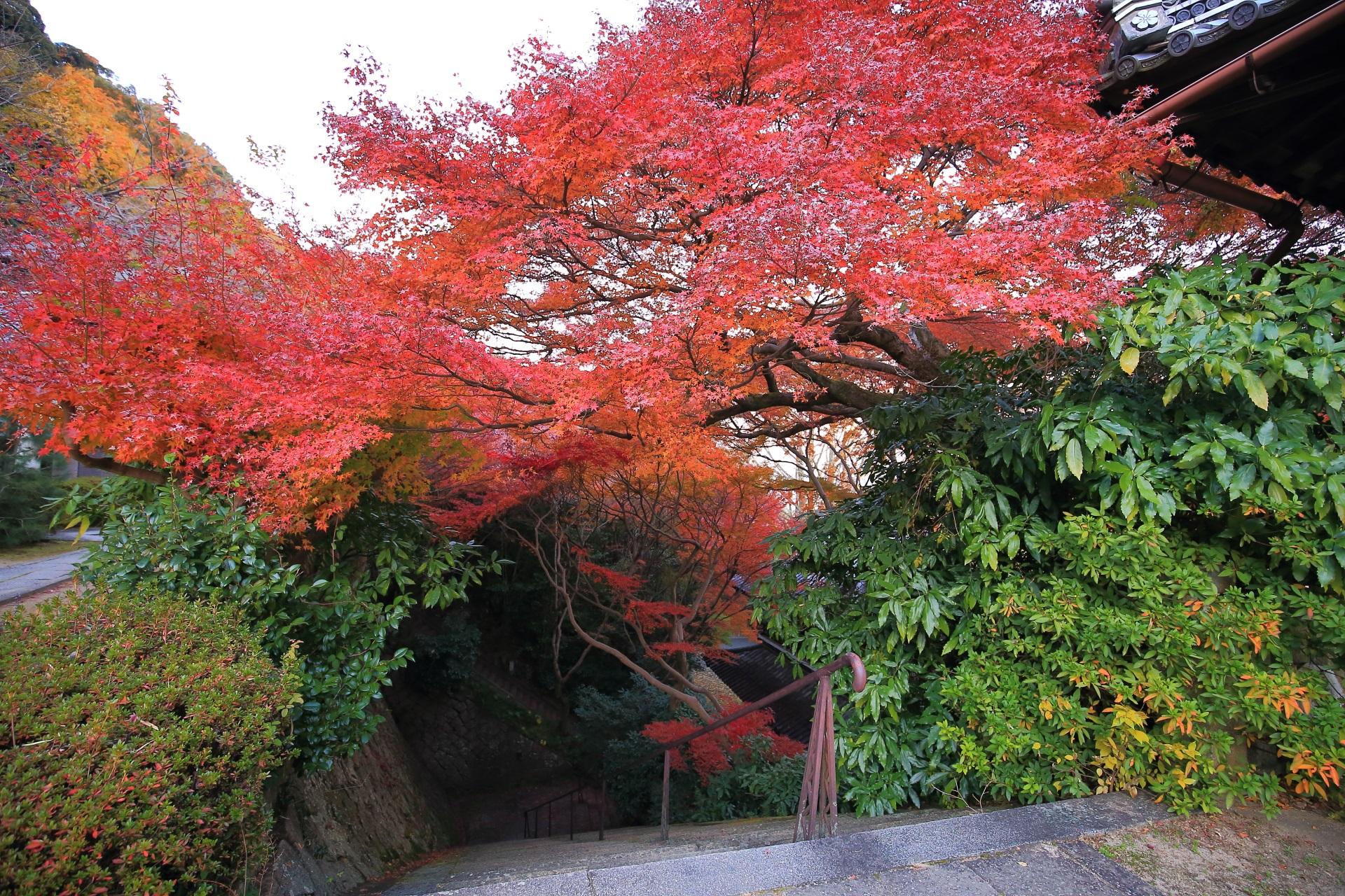仁王門へ続く石段で華やぐ赤い紅葉
