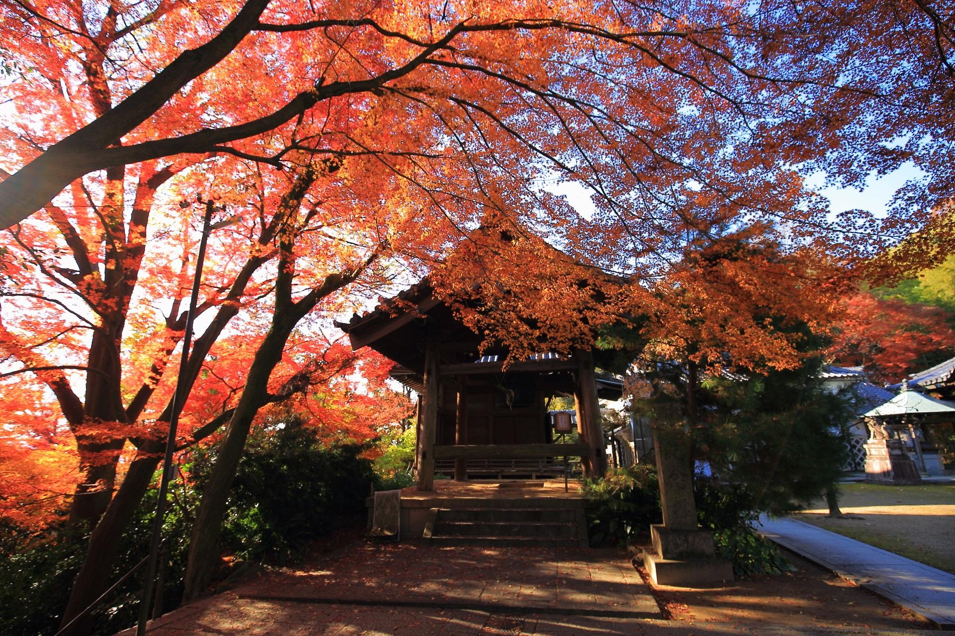 日が差している時の鐘楼前の煌びやかな紅葉