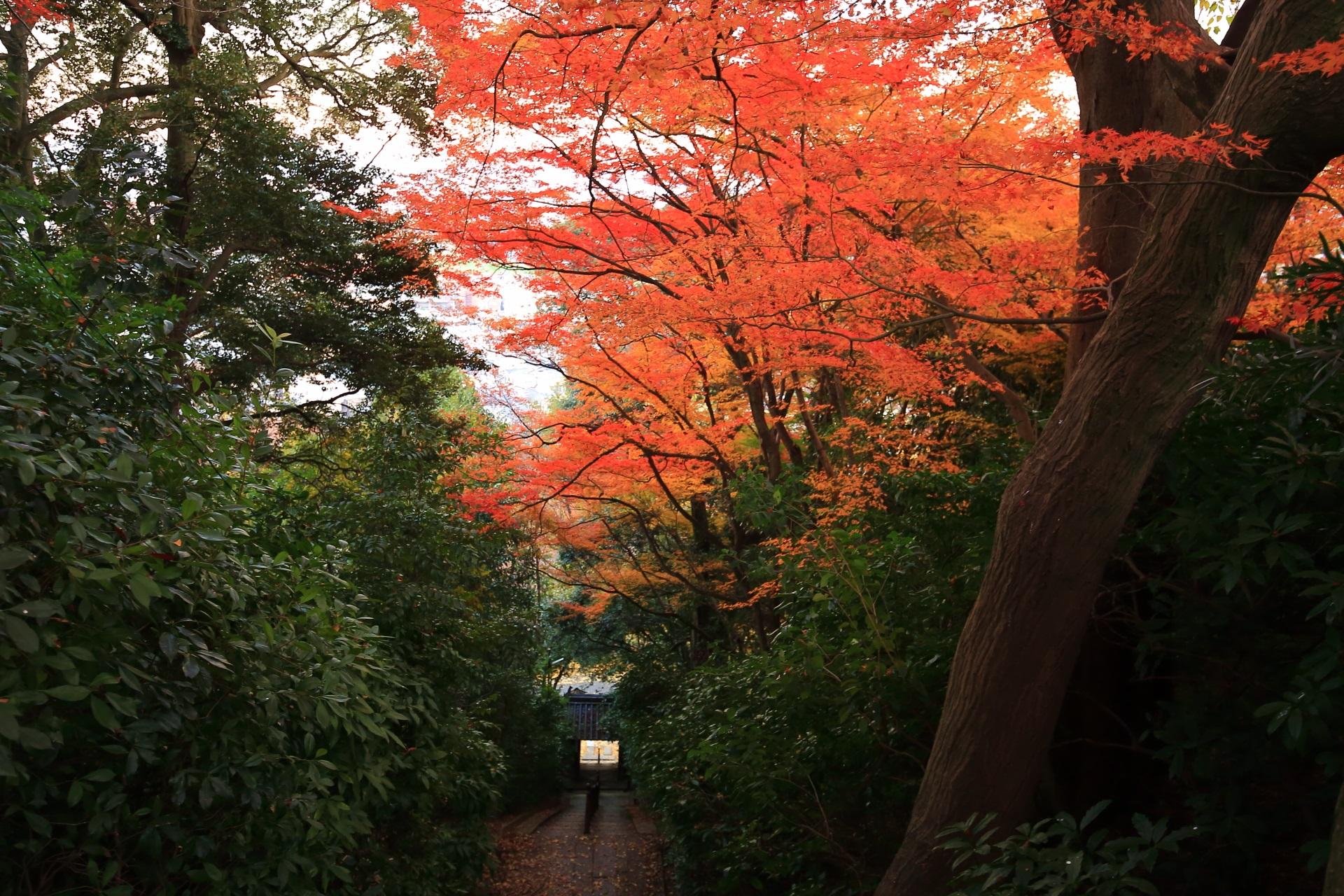 長い石段の参道を彩る紅葉