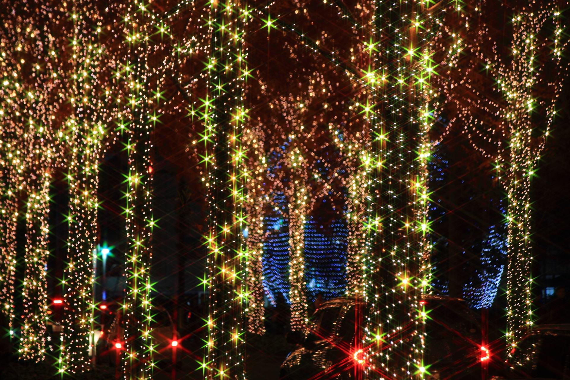 煌くメタセコイア並木のロームイルミネーション