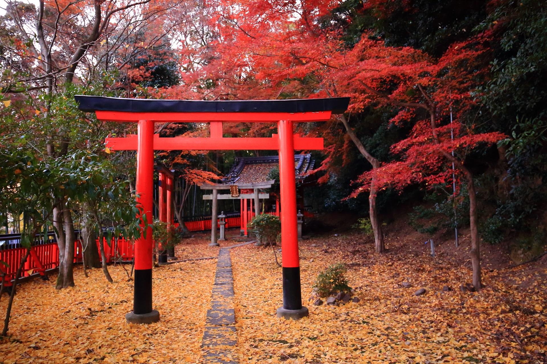 鳥居の並ぶ鎮守社を彩る紅葉と散り銀杏