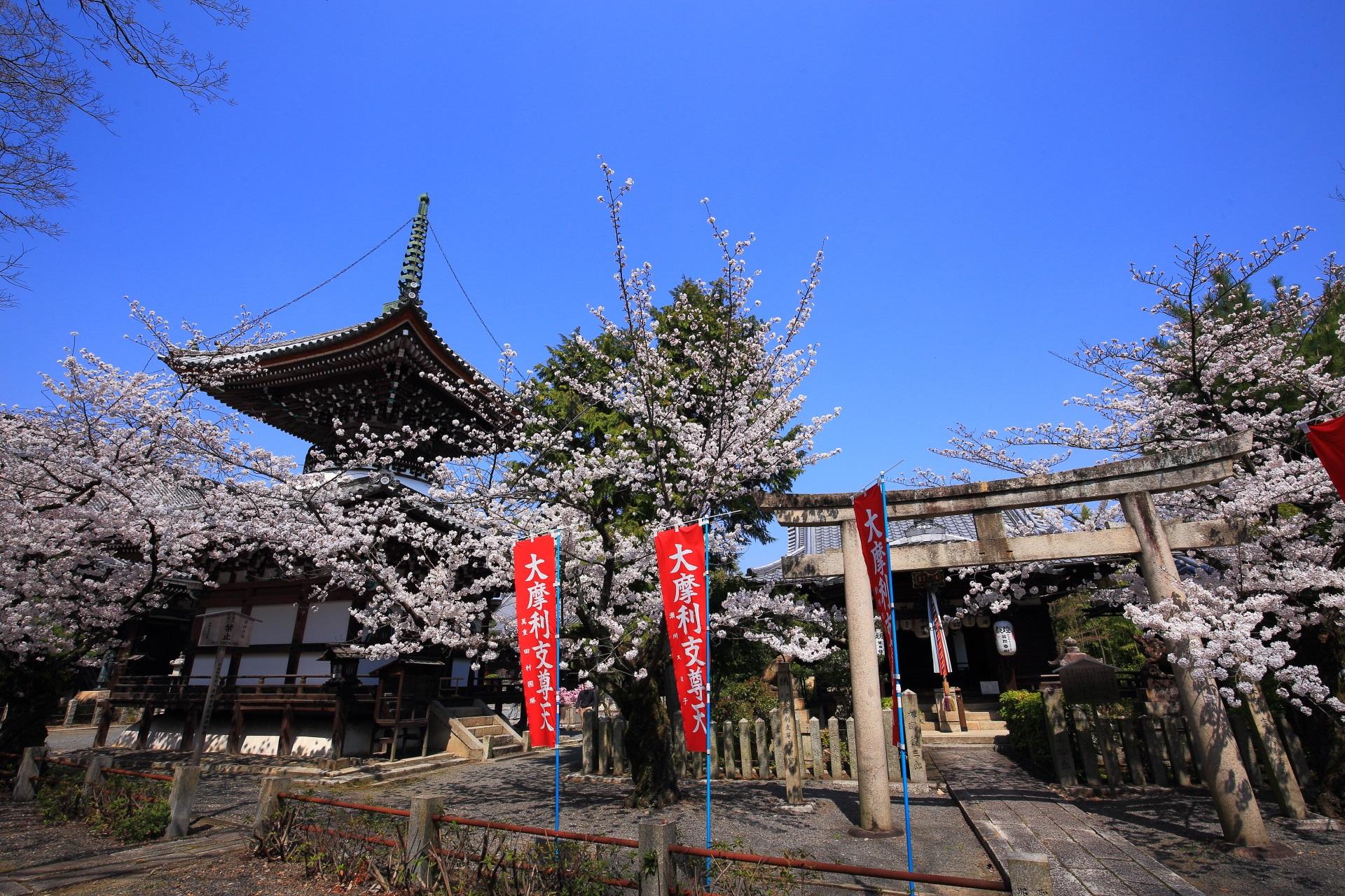 本法寺の多宝塔と摩利支天堂と桜