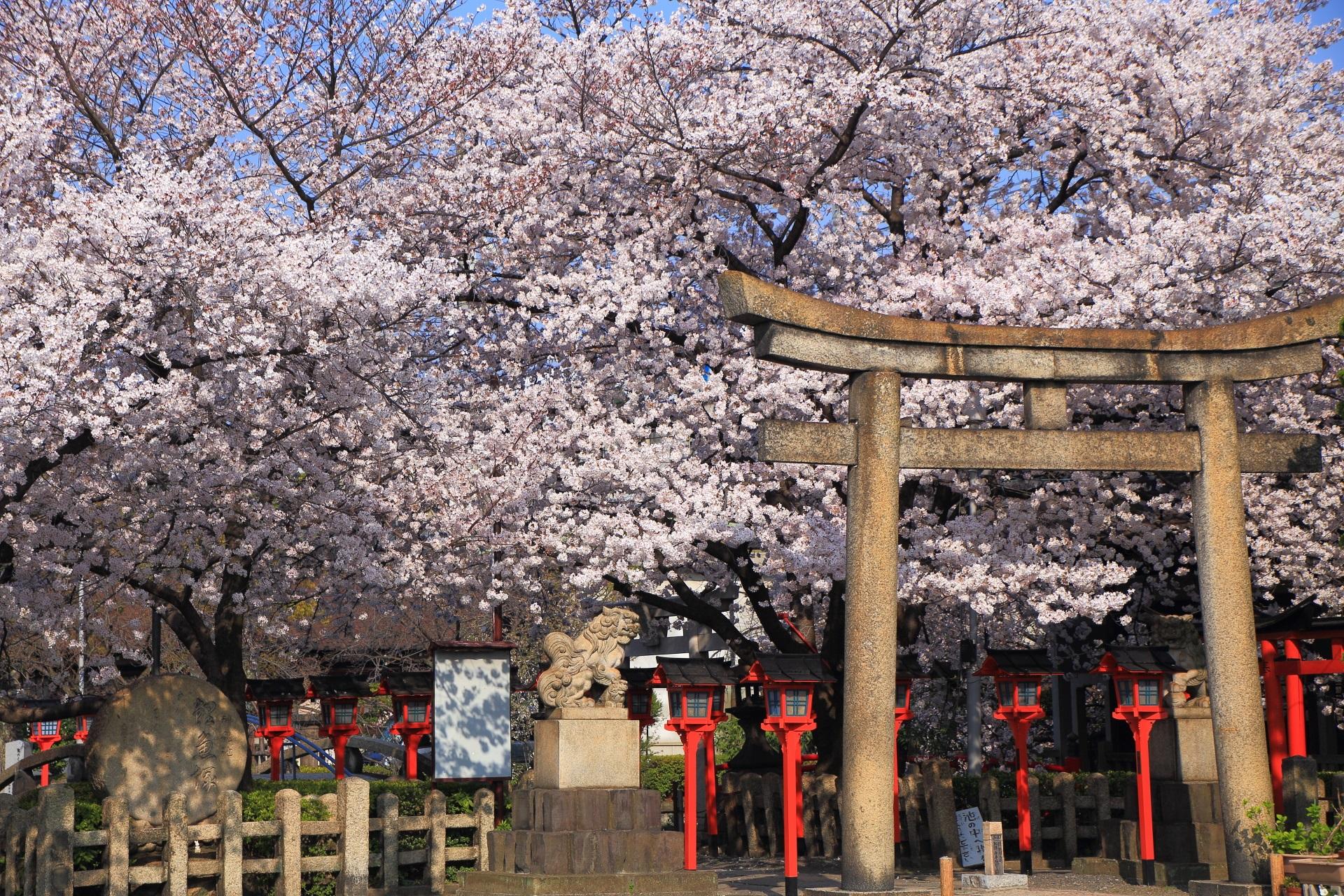 六孫王神社の咲き乱れる圧巻の桜