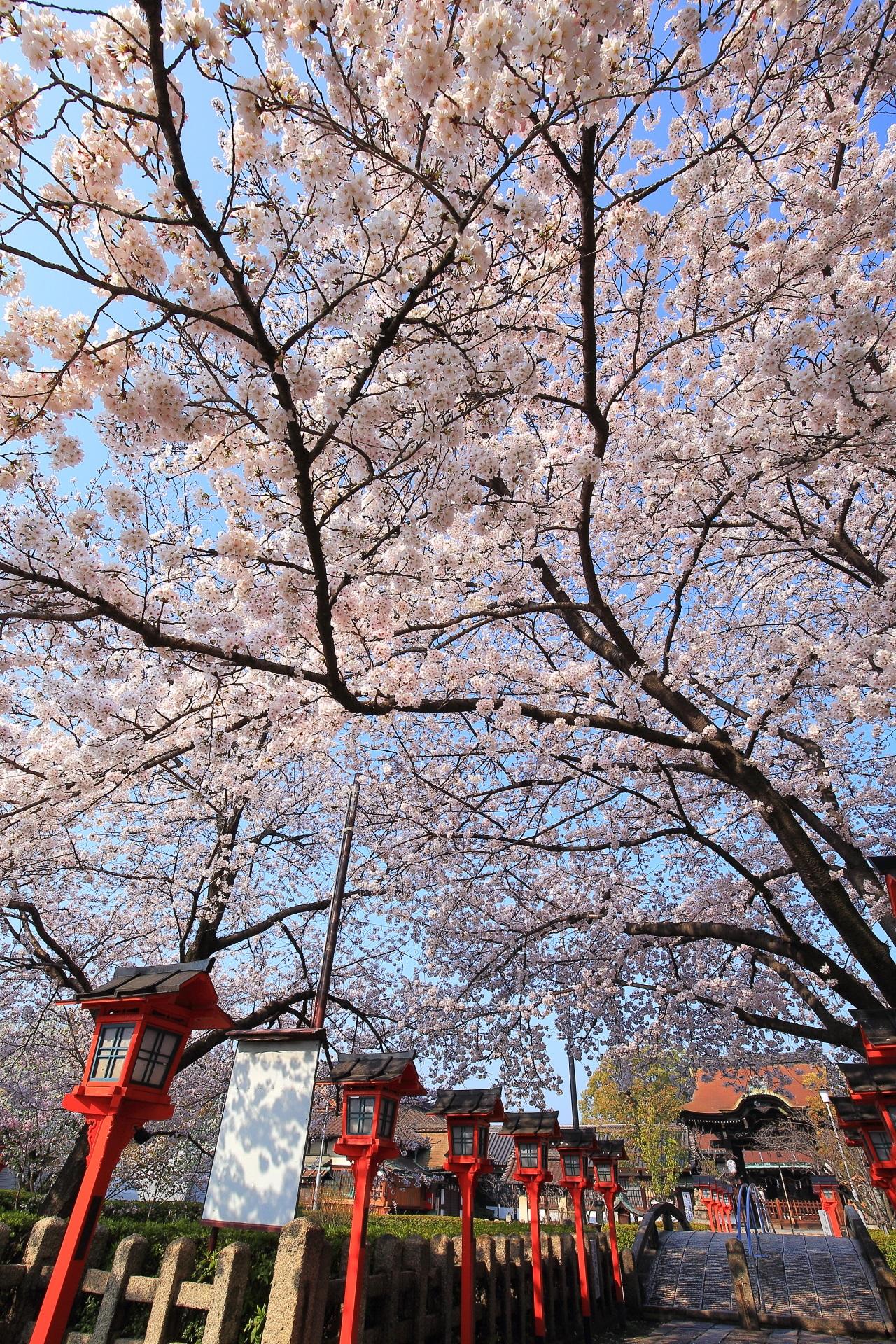 六孫王神社の上から下まで溢れる桜
