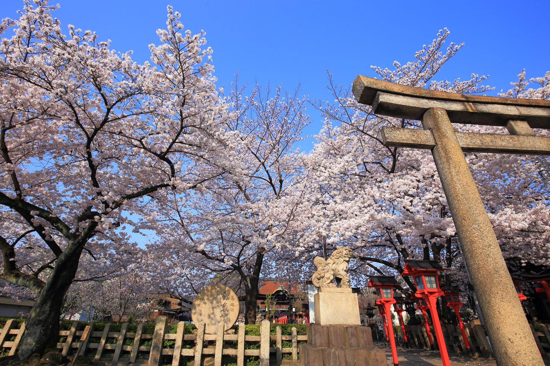 六孫王神社の溢れ出す桜