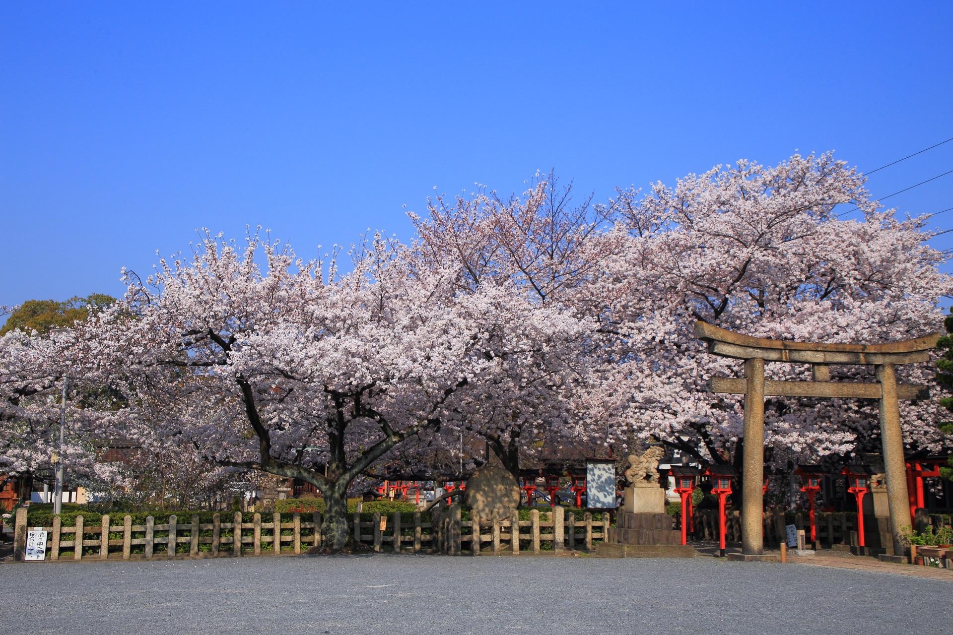 高画質 六孫王神社 桜 画像
