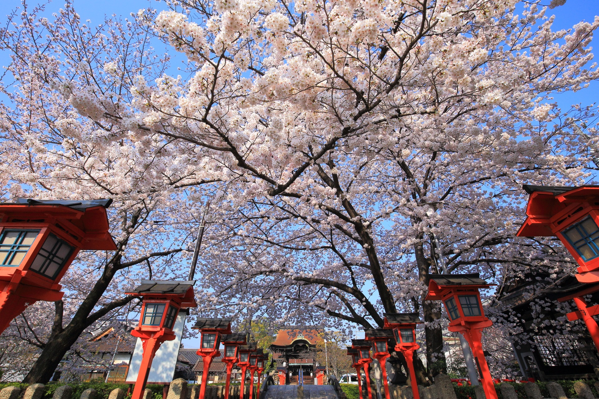 高画質 写真 六孫王神社 桜