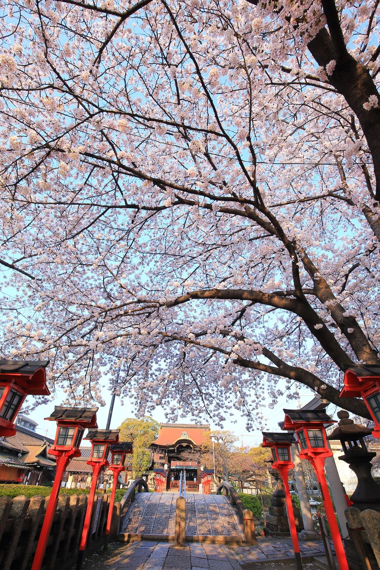 六孫王神社の素晴らしすぎる春色の情景と桜