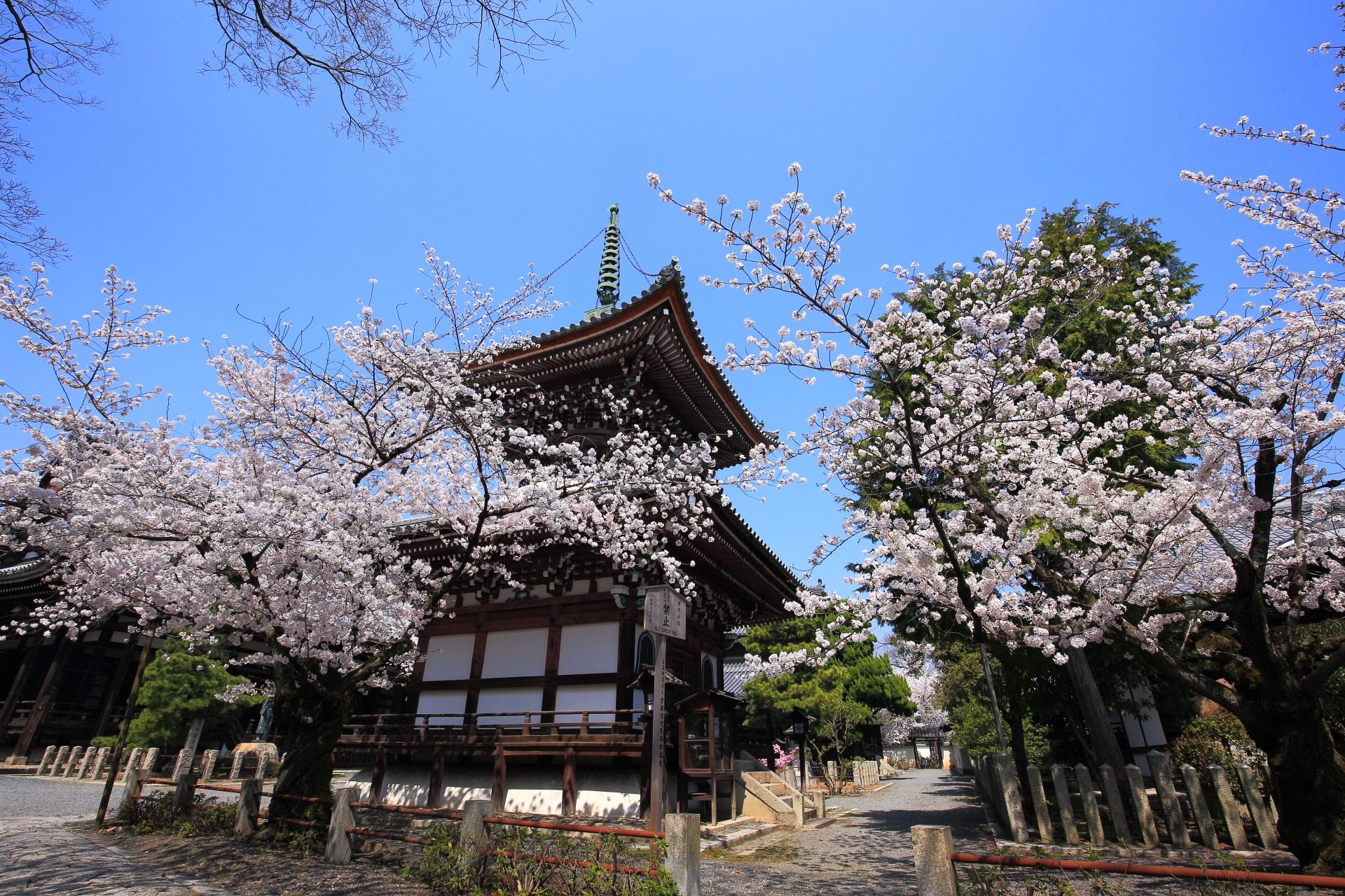 桜の隠れた名所の本法寺