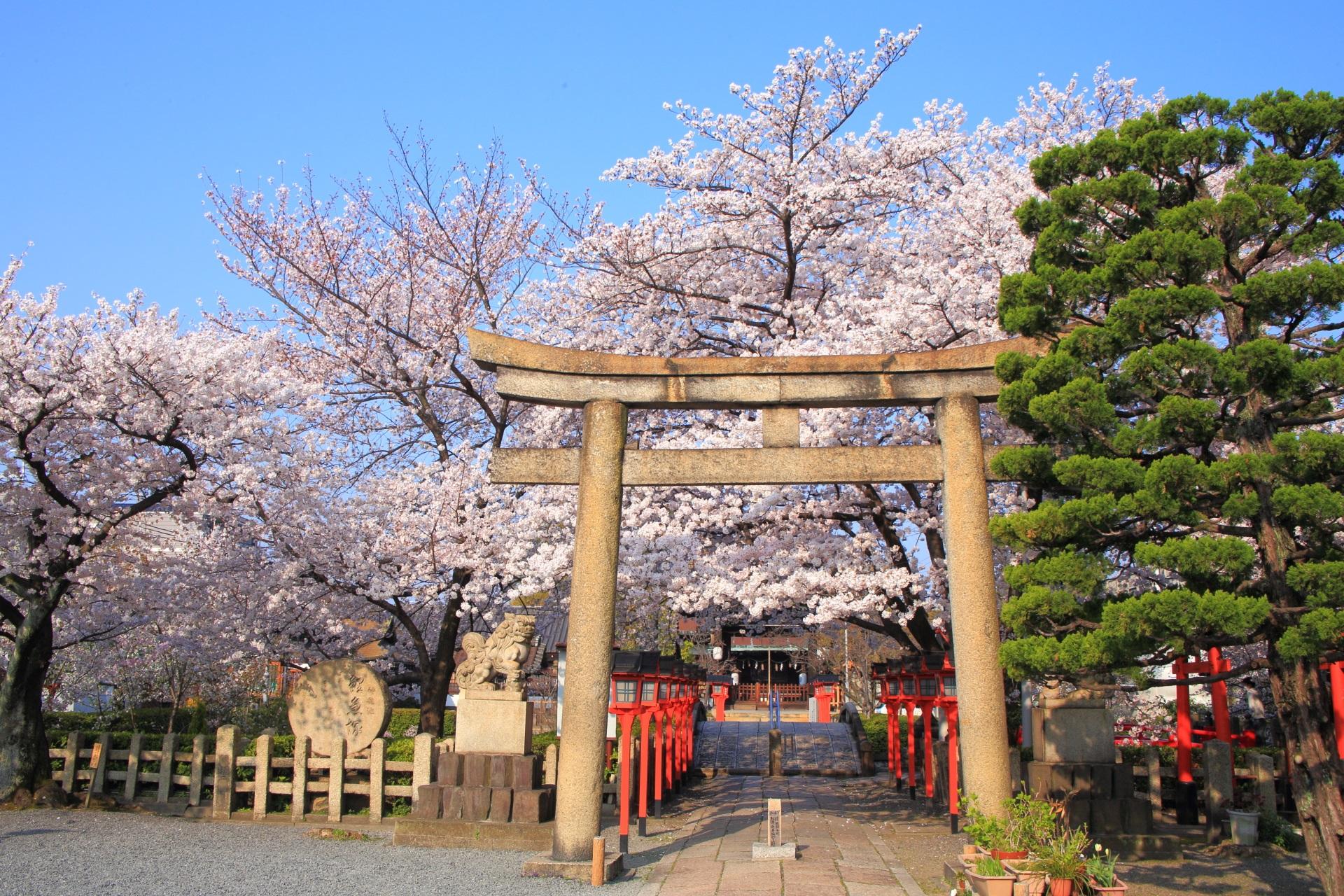 六孫王神社の桜につつまれる鳥居と参道