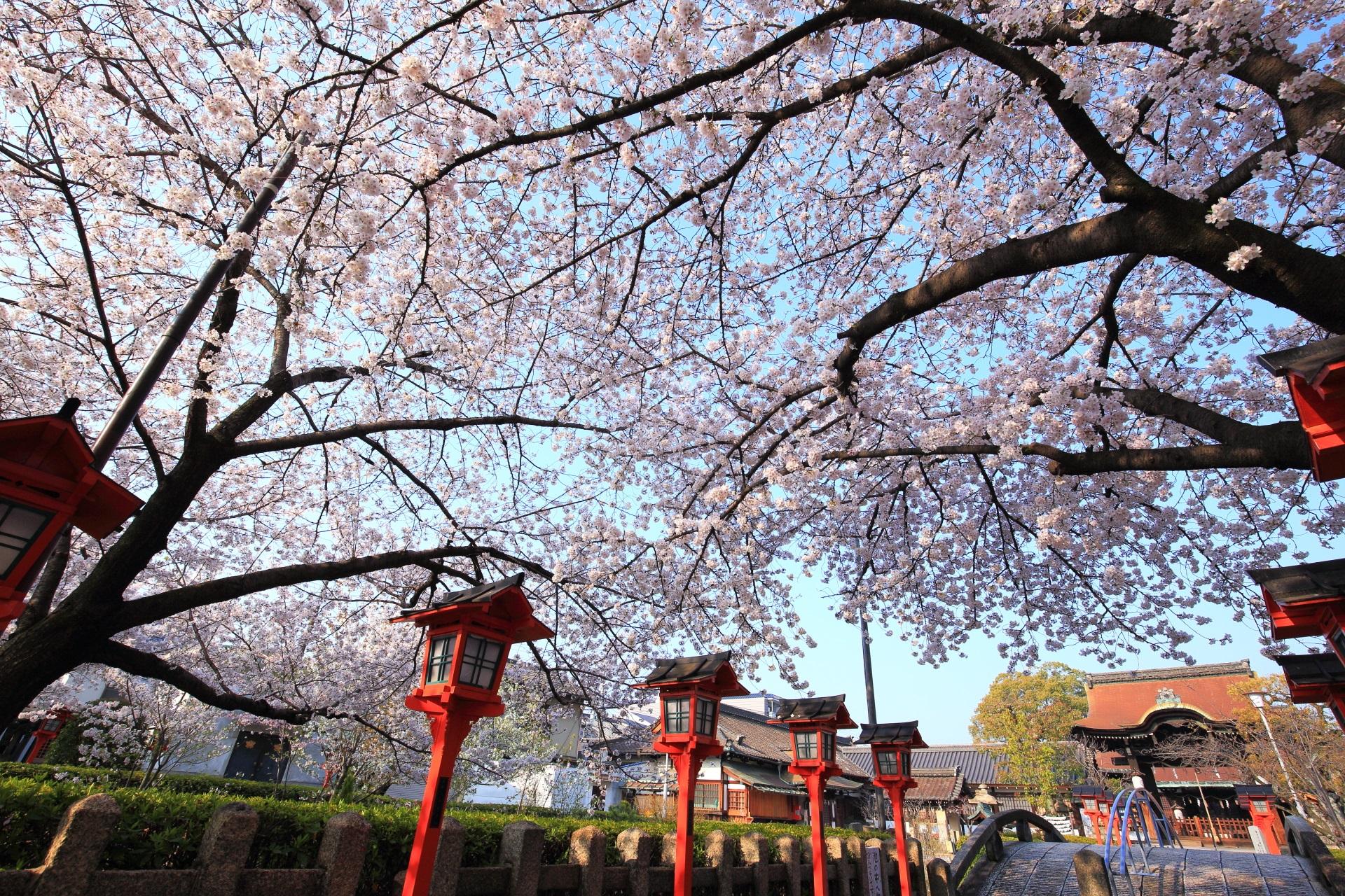 六孫王神社の華やかな桜と見事な枝ぶり