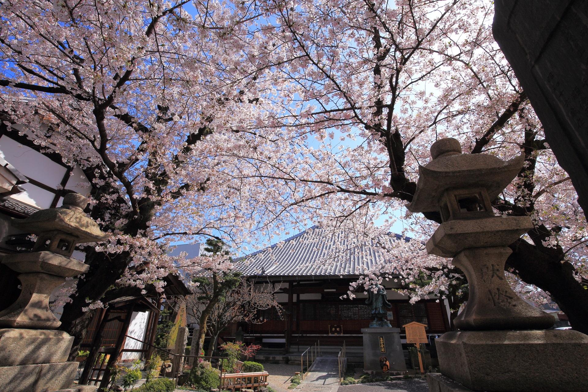 墨染寺の素晴らしい桜と春の情景