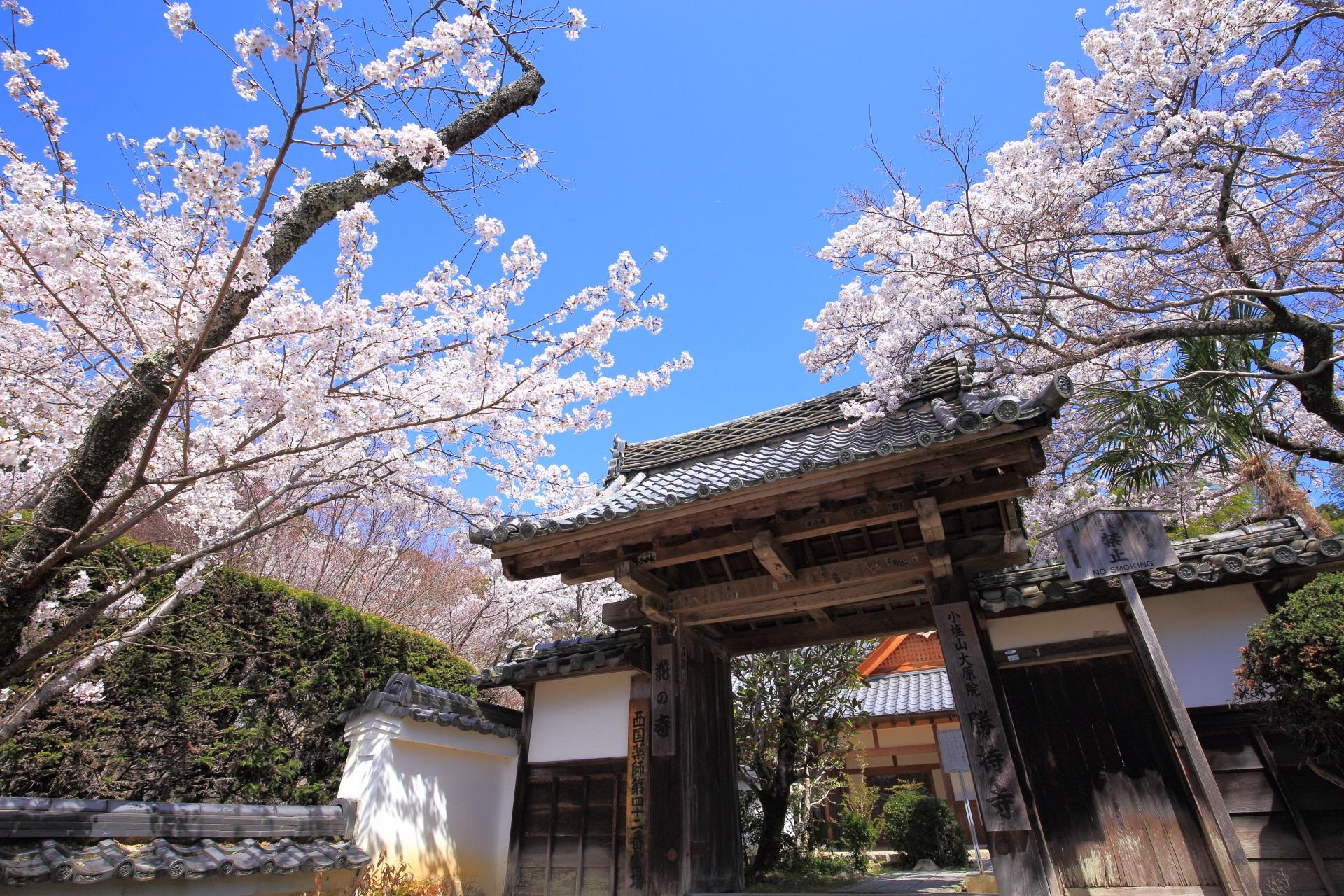 勝持寺の山門(南門)の桜