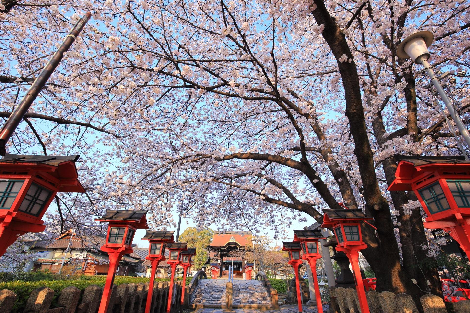 六孫王神社の圧倒的な桜