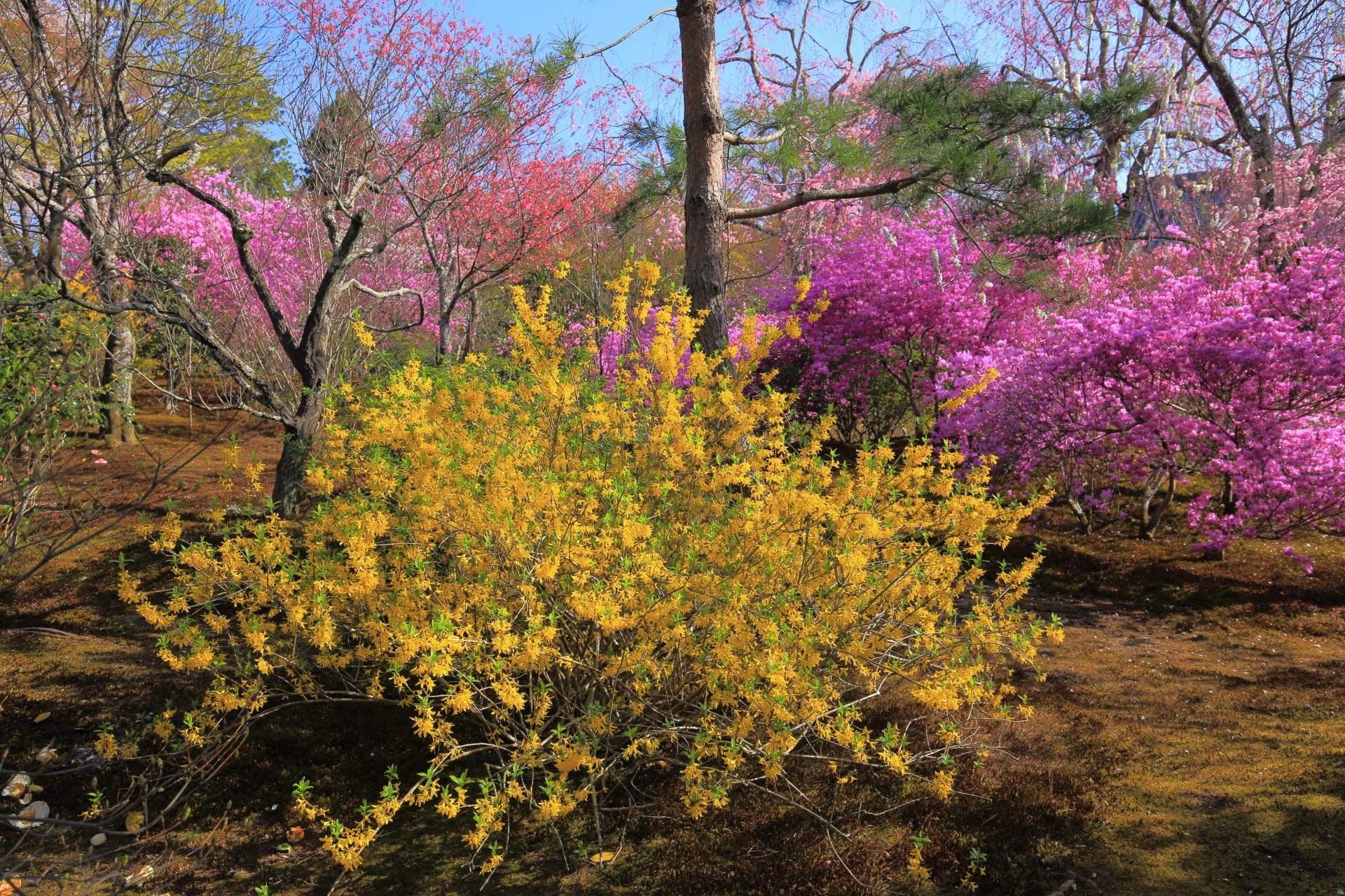 色とりどりの花々につつまれる天龍寺の春の百花苑