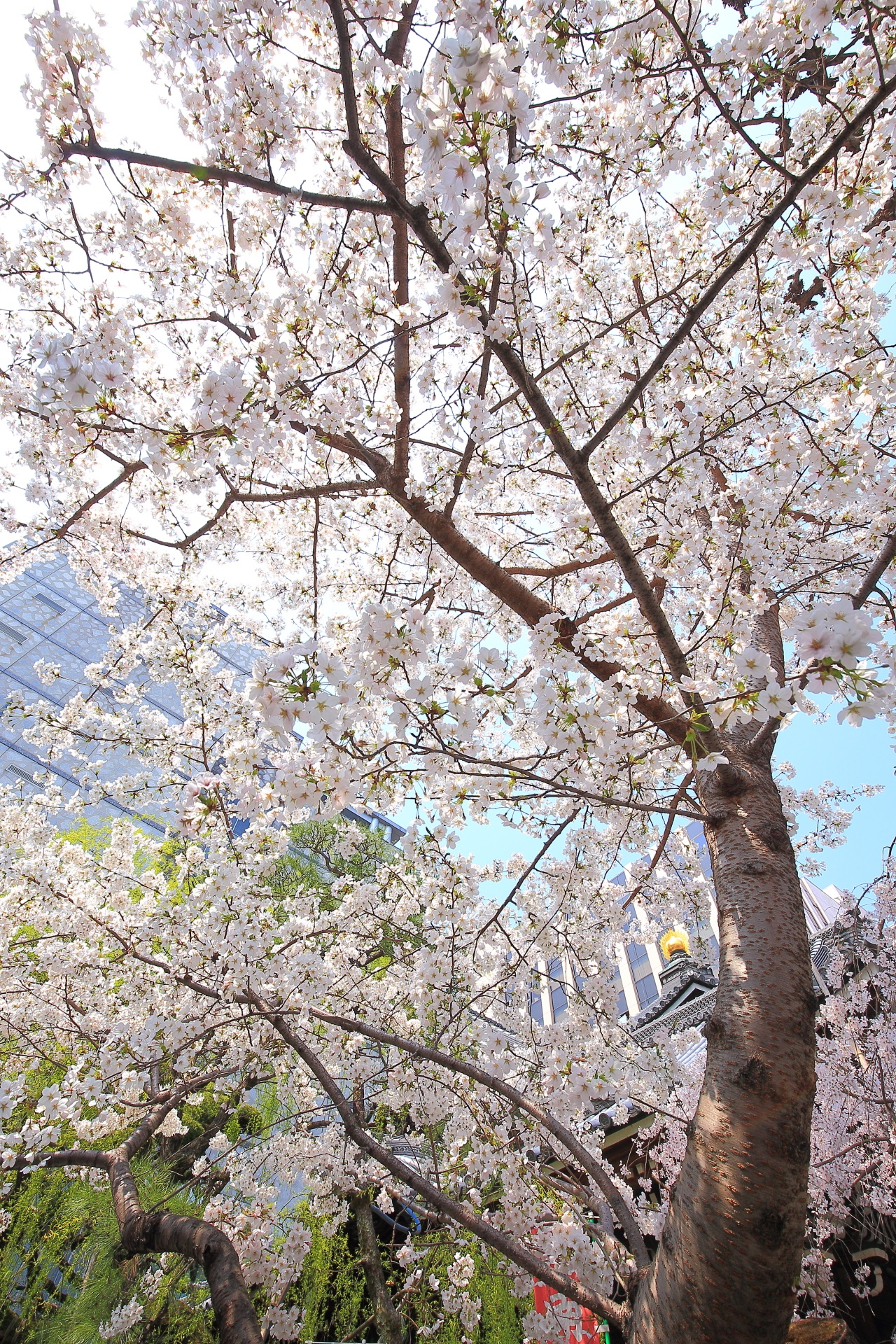 六角堂の絵になる華やかな春色
