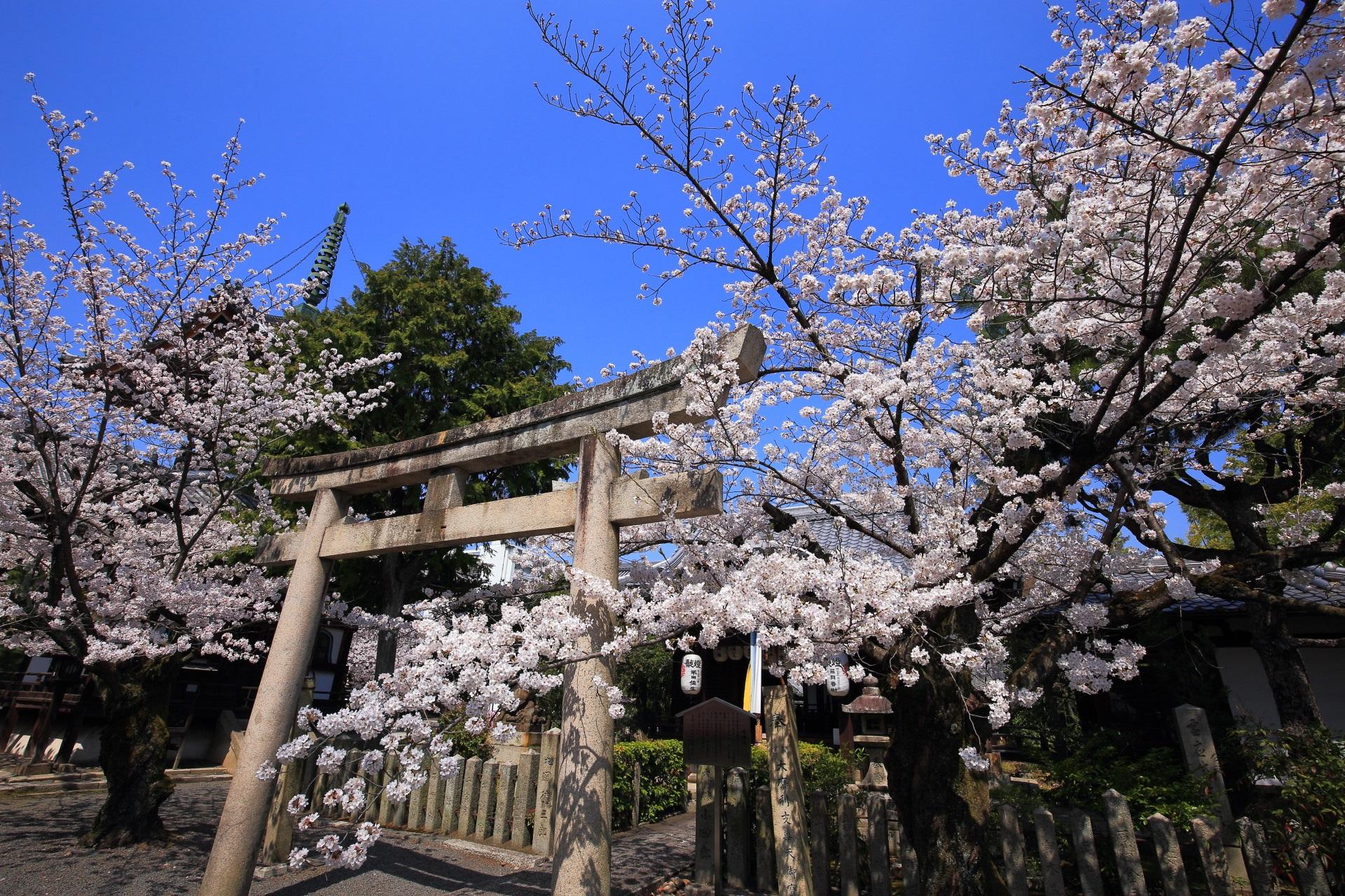 本法寺の摩利支天堂と桜