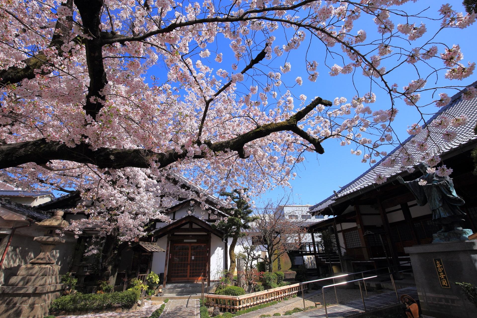 墨染寺の桜と枝