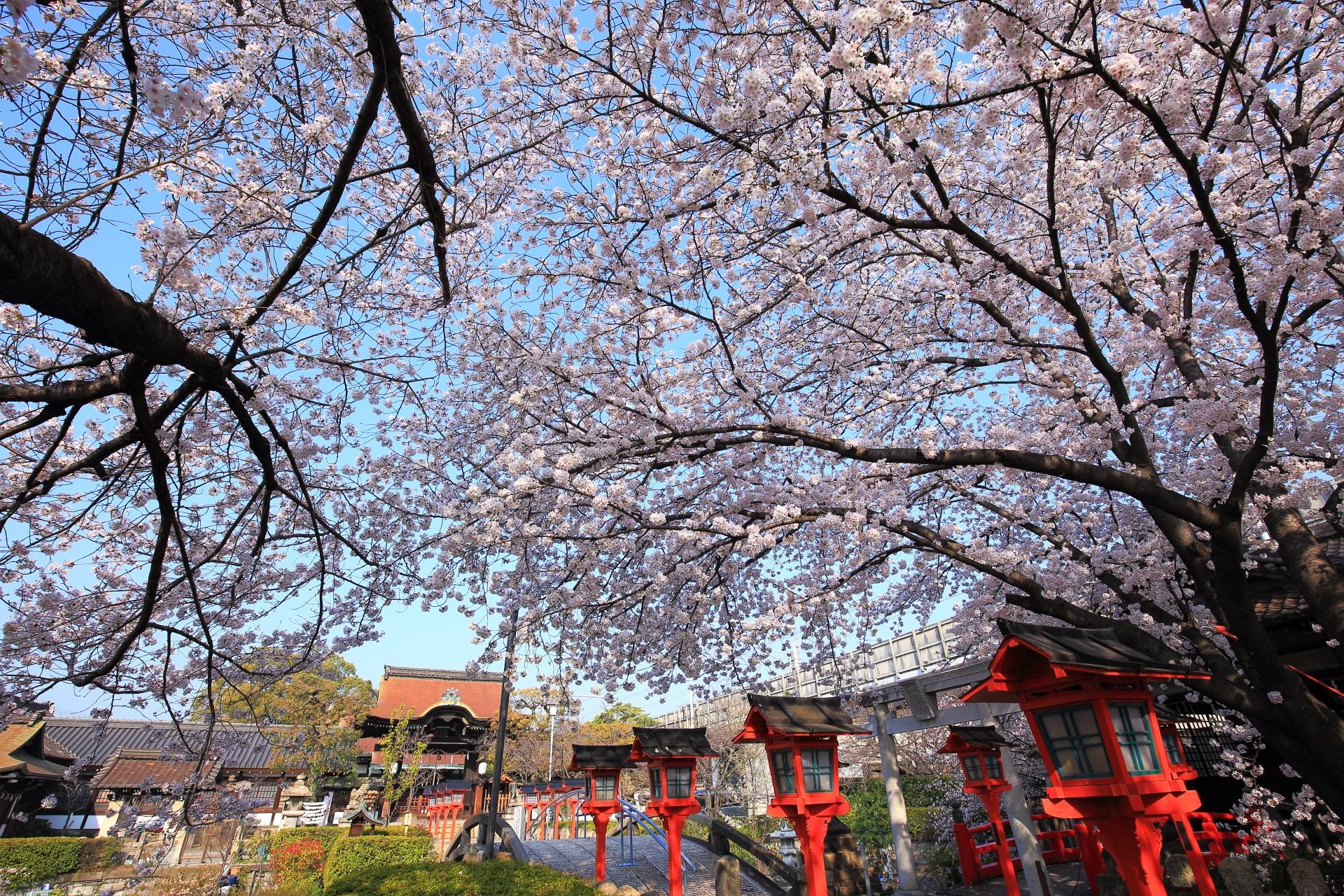 六孫王神社の絶品の桜の天井