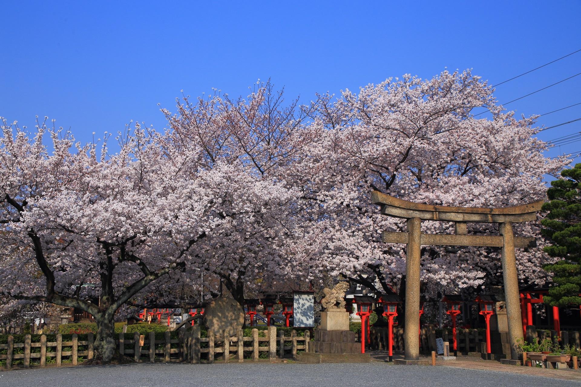 六孫王神社の遠目から眺めた境内から溢れる桜