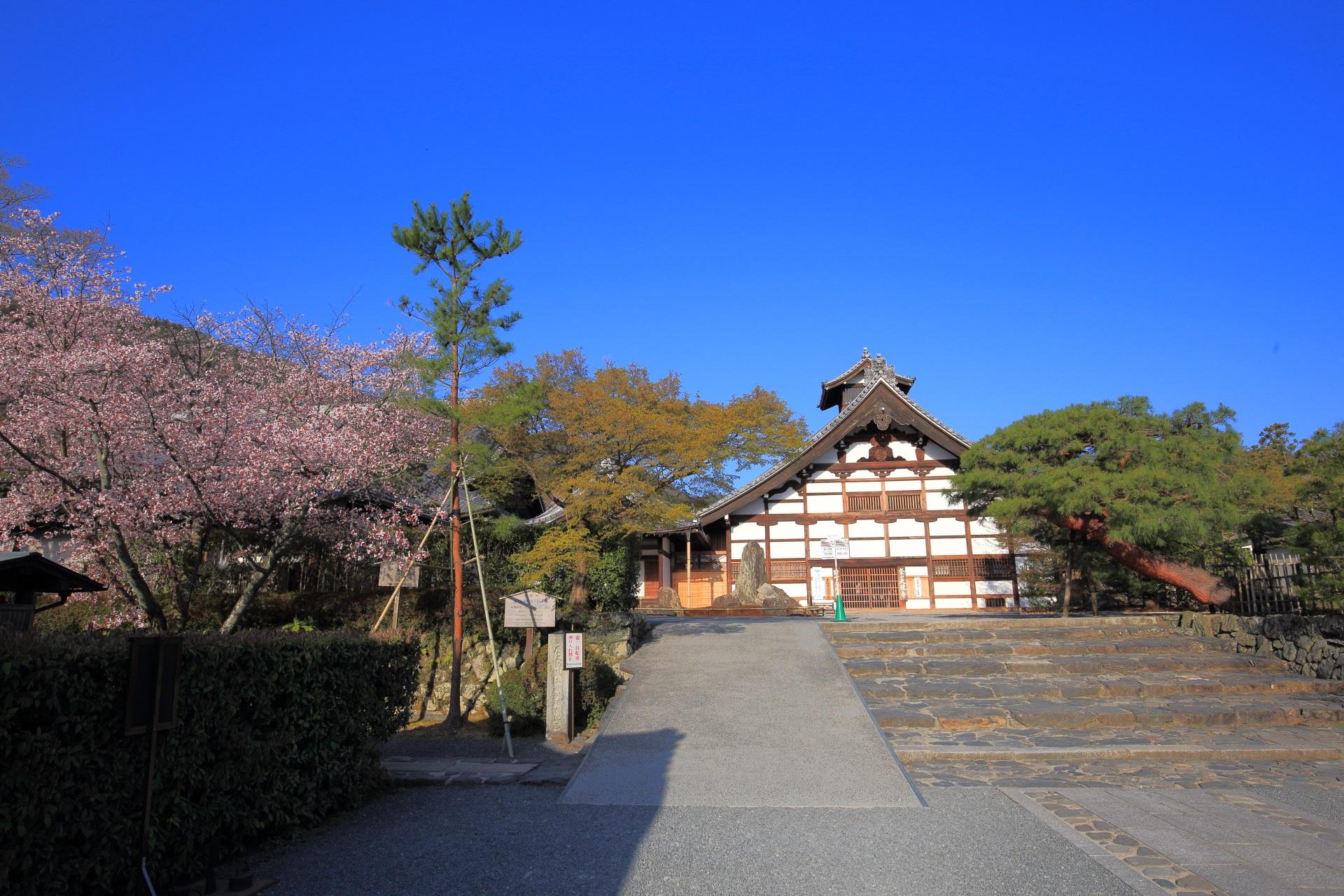 天龍寺の庫裏と桜