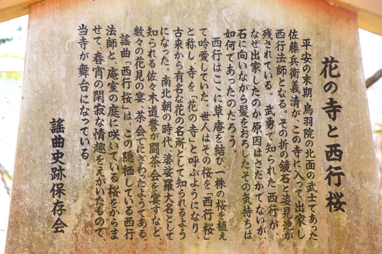 勝持寺の西行桜と花の寺の説明